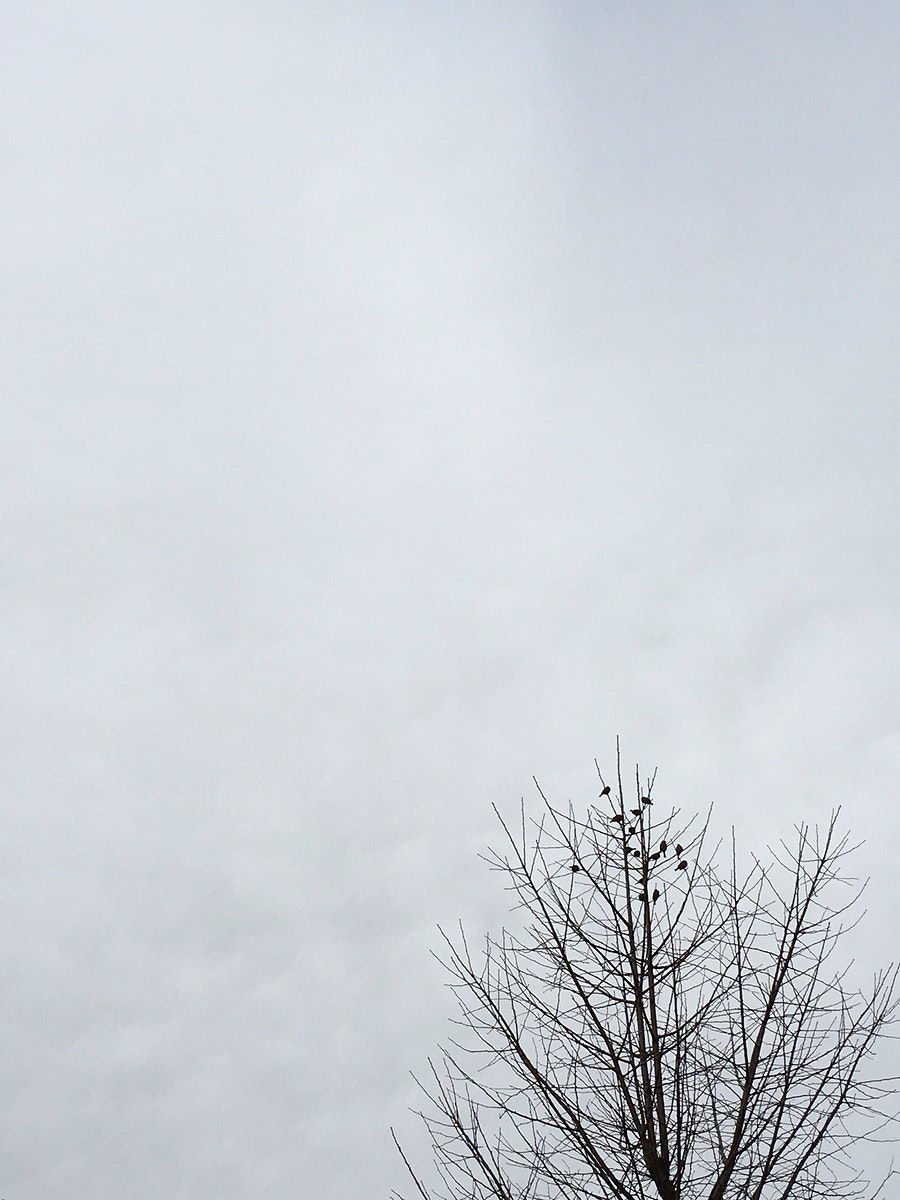 Flock of birds on tree tips with cloudy sky