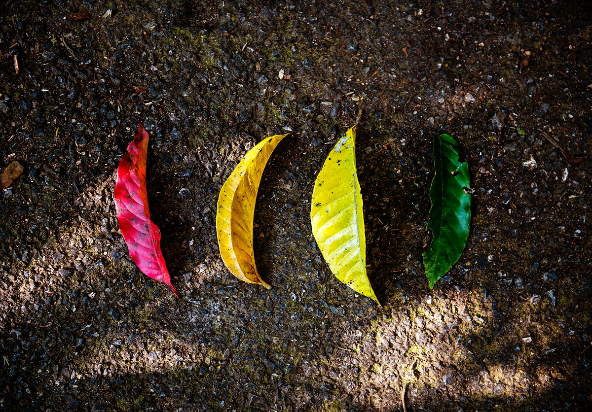 Colorful leaves on the ground in nature aerial view