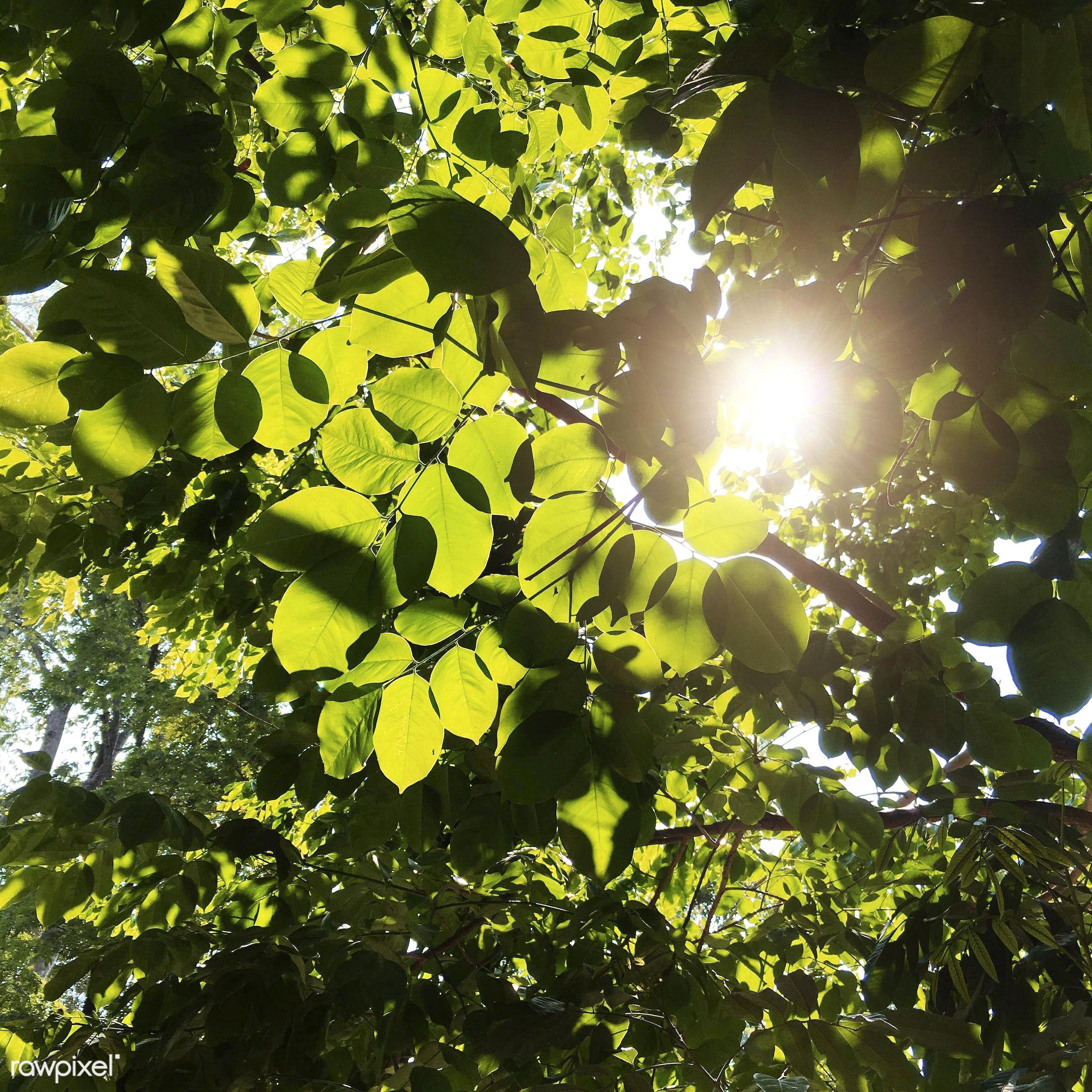Beautiful greenery - background, beautiful, beauty, branches, bright, countryside, day, daylight, dream, ecology,...