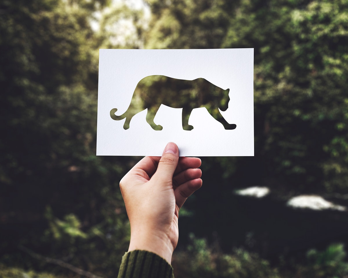 Closeup of hand holding leopard perforated paper with green nature background