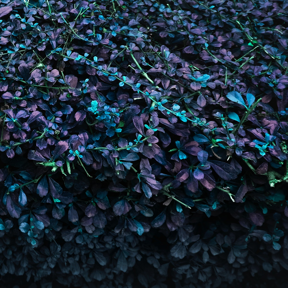 Closeup of plant leaves negative color