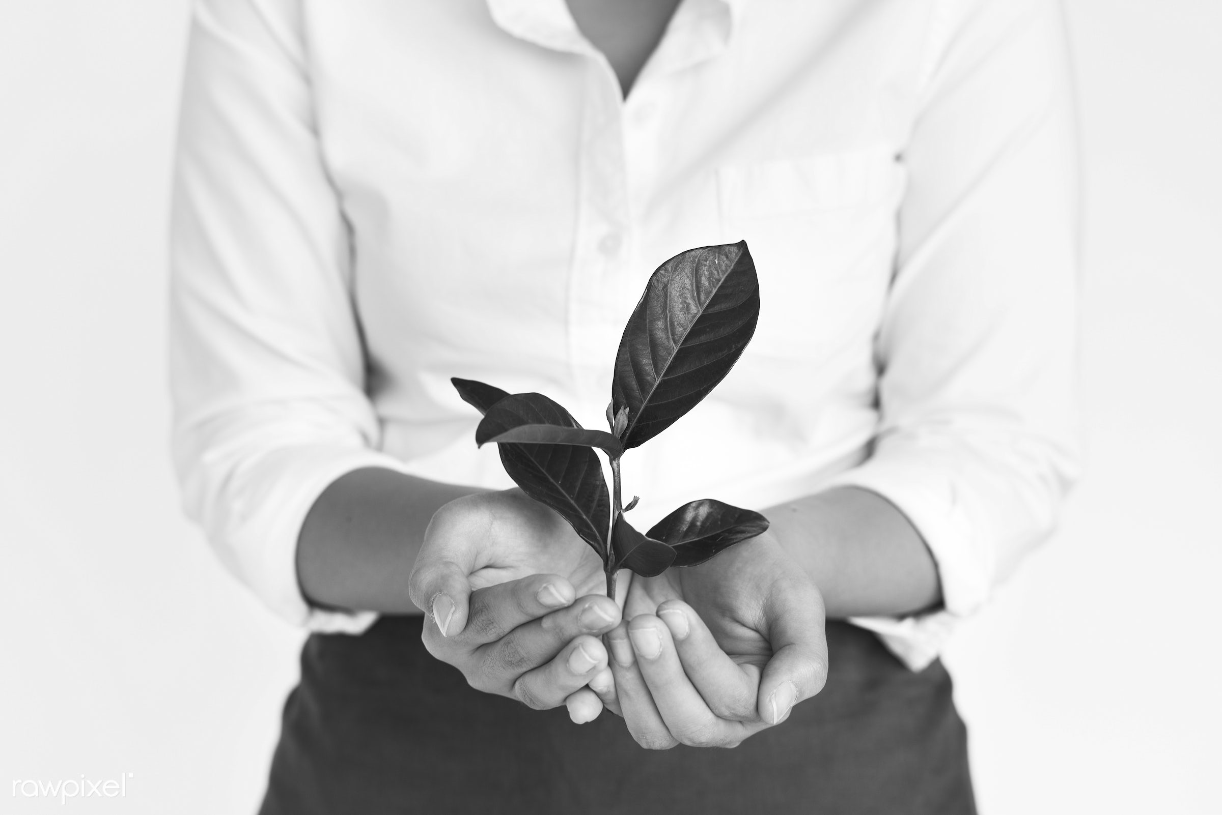 studio, expression, person, save, holding, leaves, people, preserve, asian, nature, woman, sustainability, positive,...