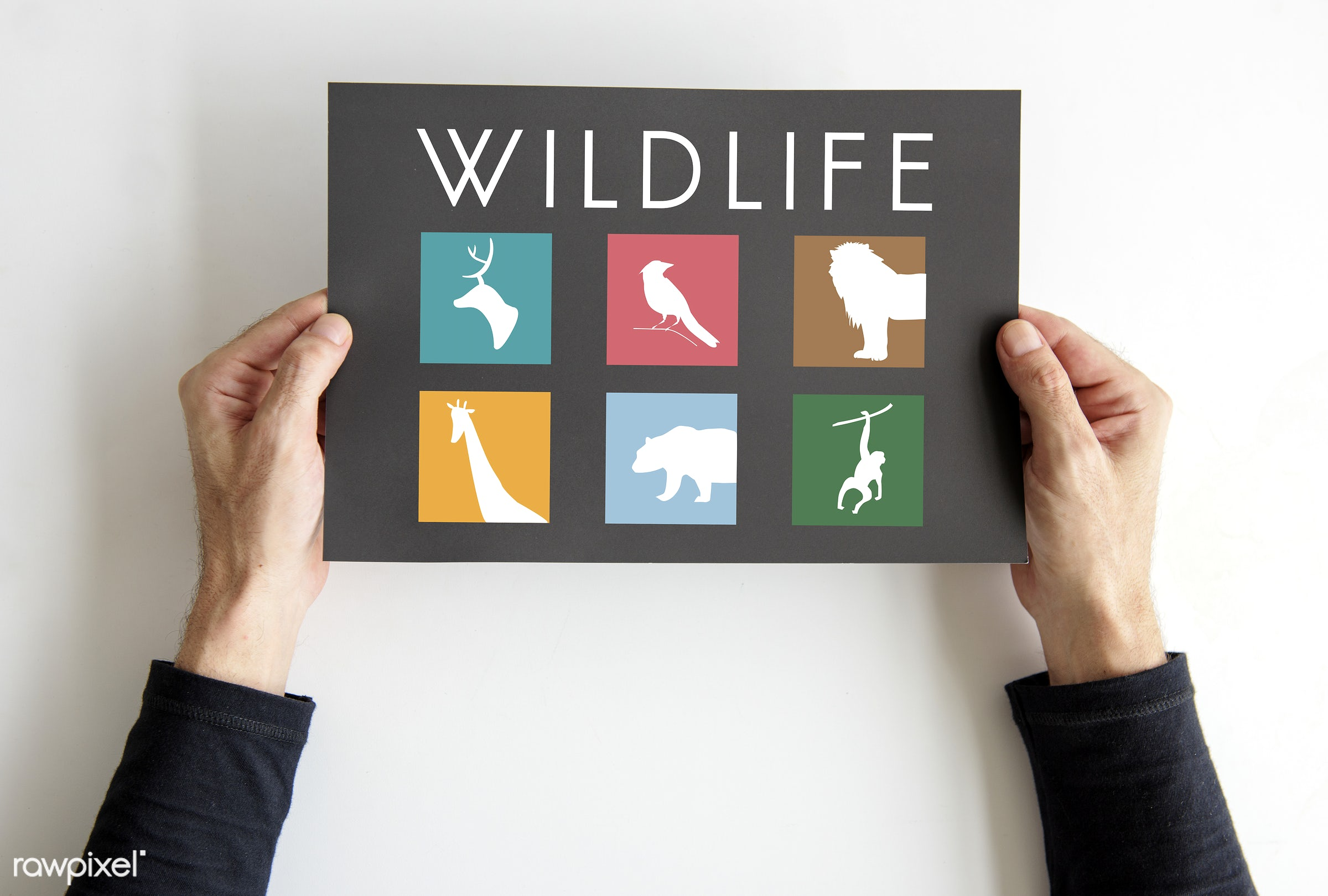 Hands holding a wildlife sign - studio, person, save, top view, fauna, relax, isolated on white, paper, announce, creatures...
