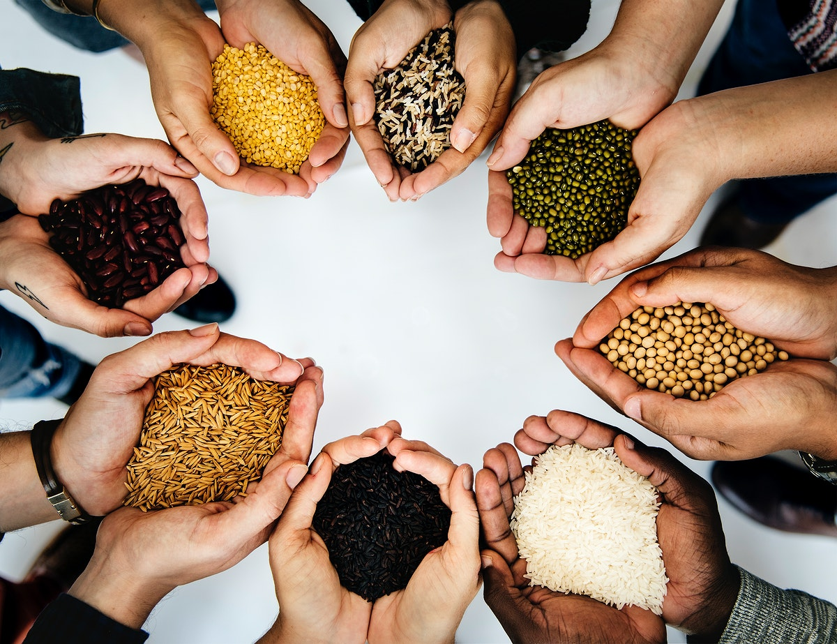 Hands with healthy organic seeds from nature product