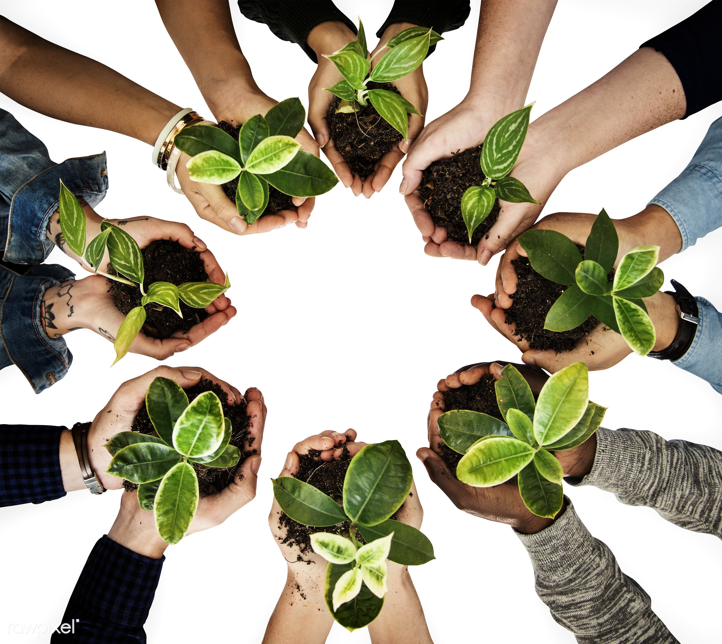 Diverse people holding plants in their hands - accessories, agriculture, background, beginning, botanical, care, casual...