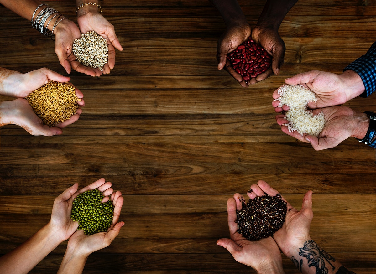 Hands holding different kind of seed and grain