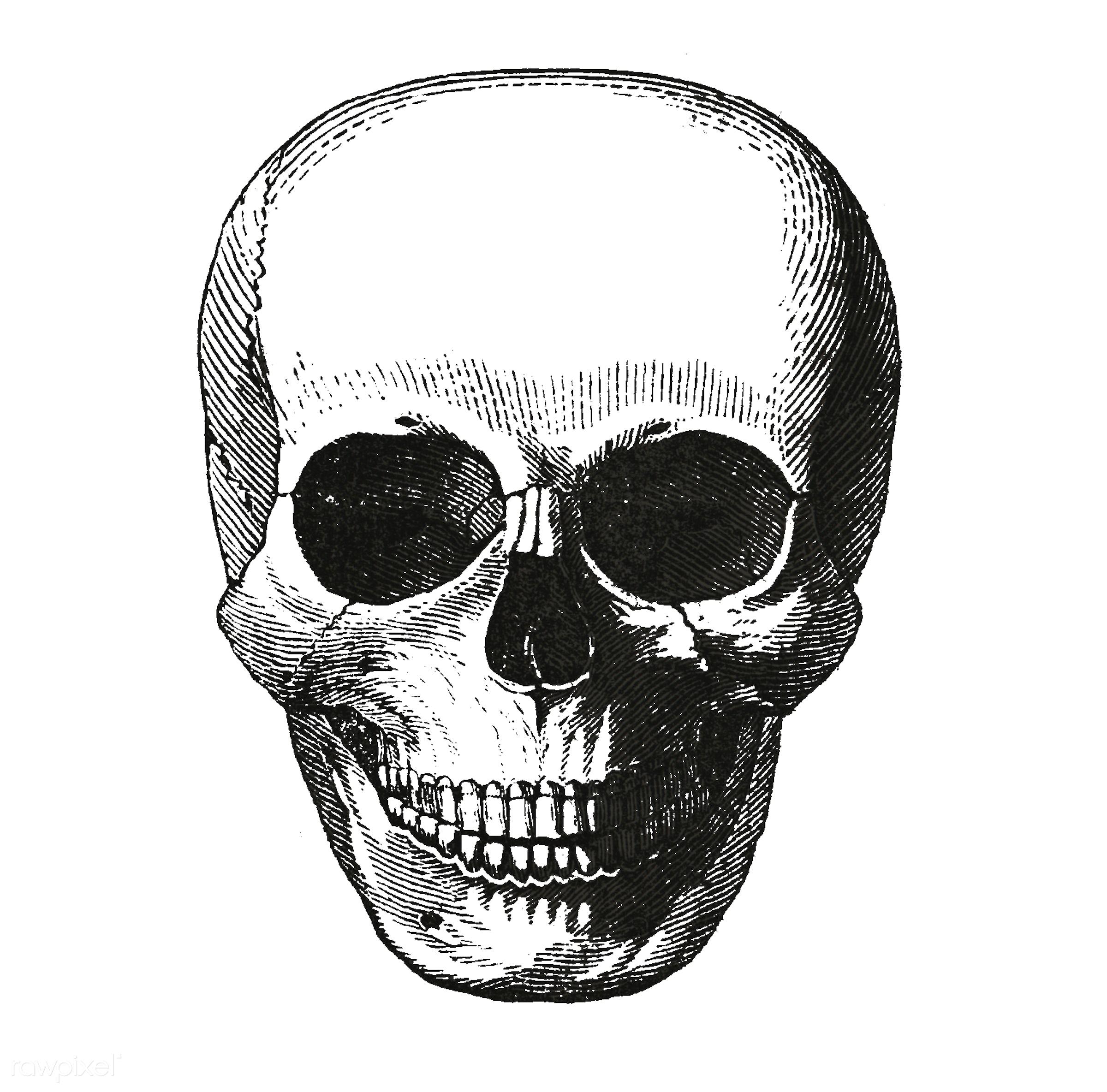 Vintage llustration of skull published in 1843 by John Lloyd Stephens (1805-1852). - anatomy, antique, artwork, drawing,...