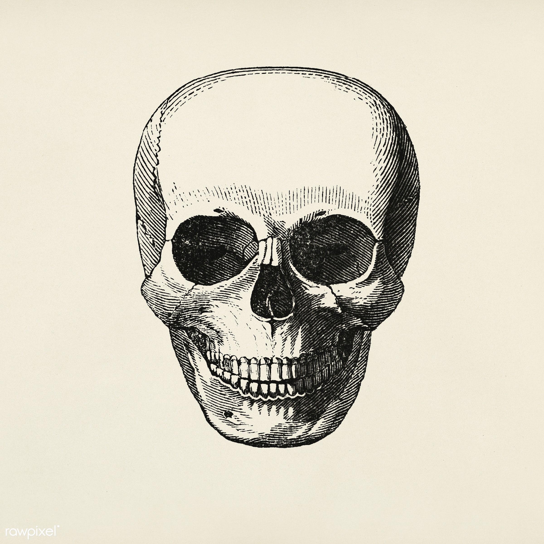 Vintage llustration of skull published in 1843 by John Lloyd Stephens (1805-1852). - antique, artwork, cc0, creative common...