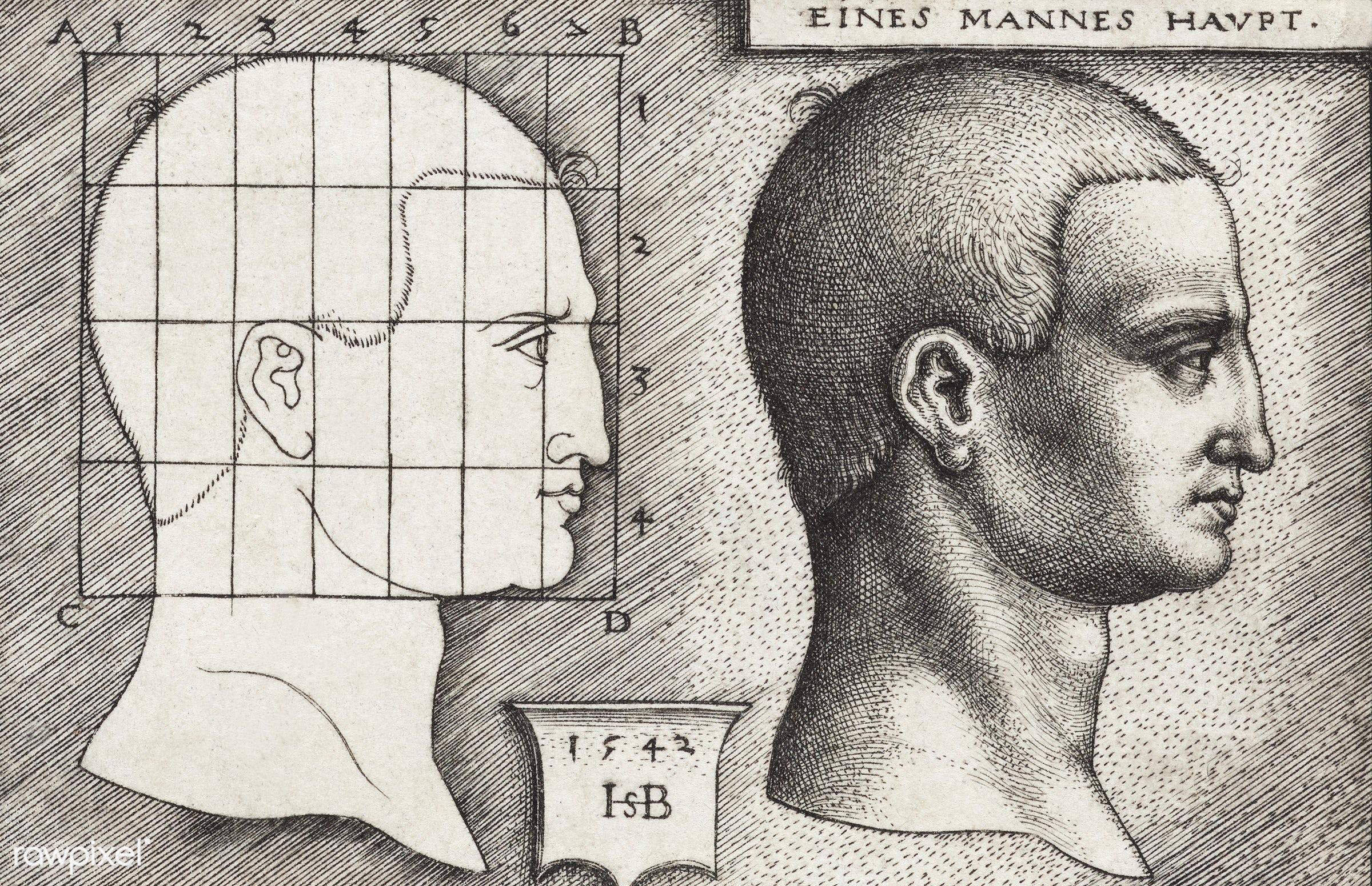 Vintage Illustration Profile Study of Man's Head published in 1542 by Hans Sebald Beham (1500-1550) - anatomy, antique,...