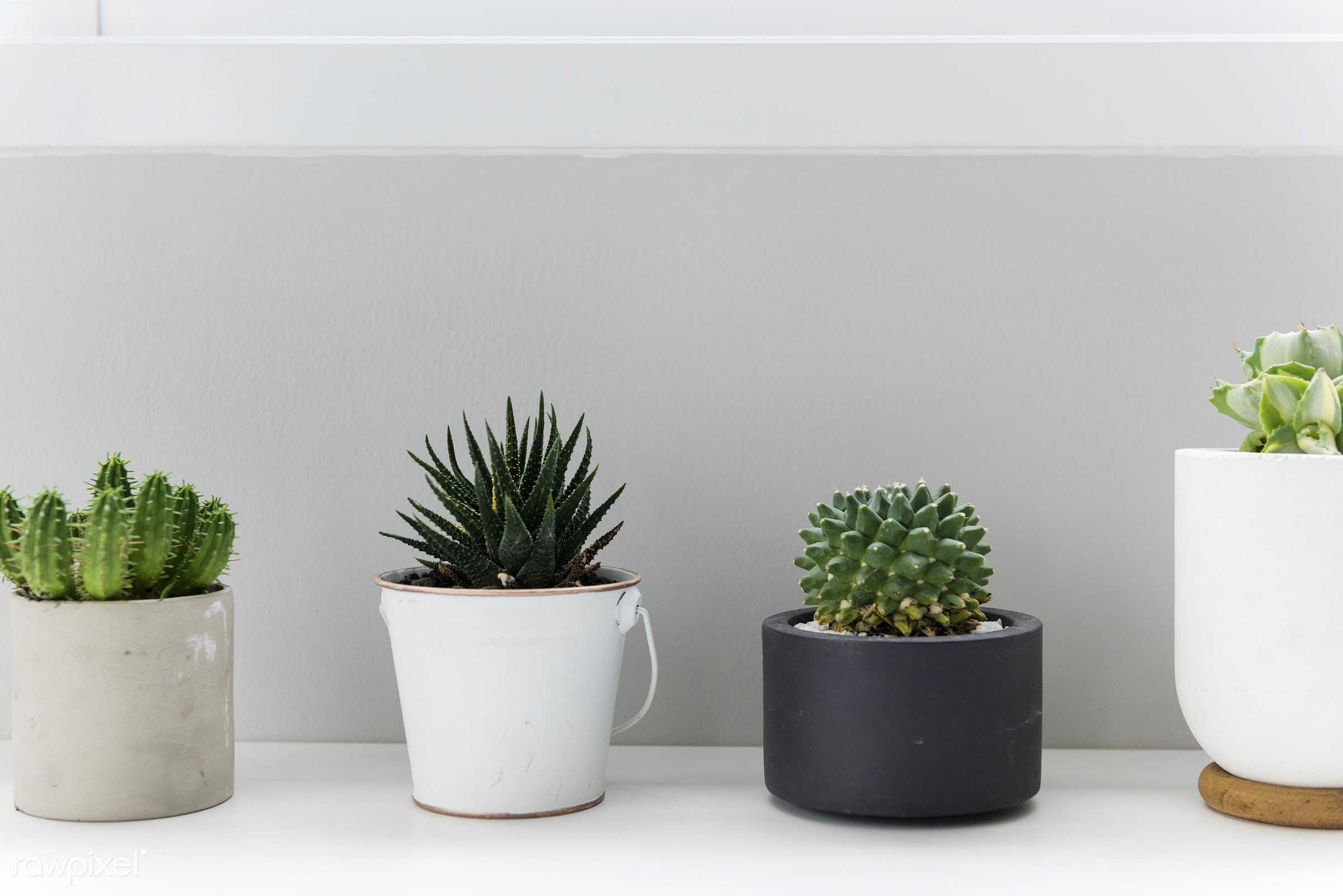 Pots of Cactus for Decoration - minimal, cactus, plant, botanical, botany, decorate, green, nature, pot, simple, simplicity...