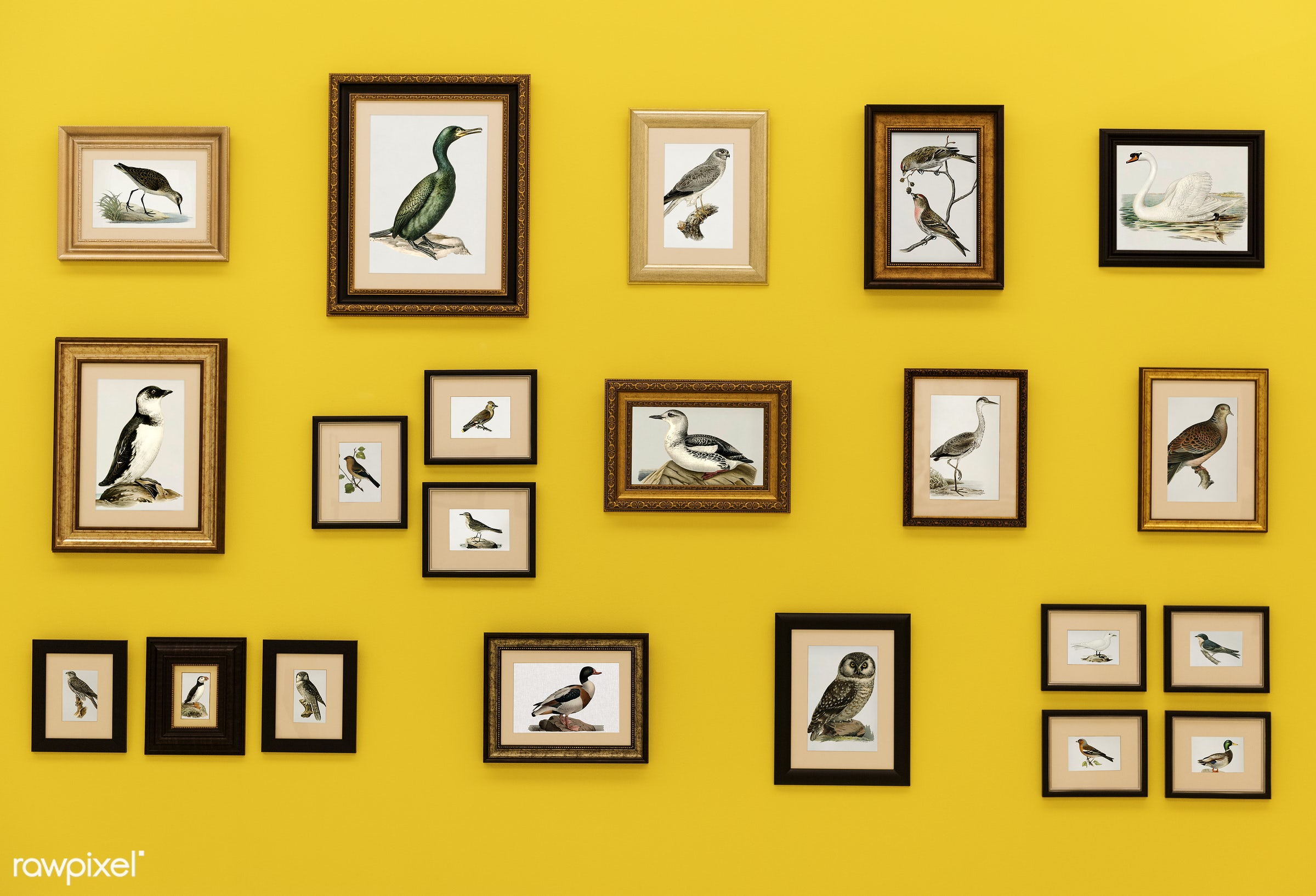 Pictures of birds in frames hanging on yellow wall - ID: 295378