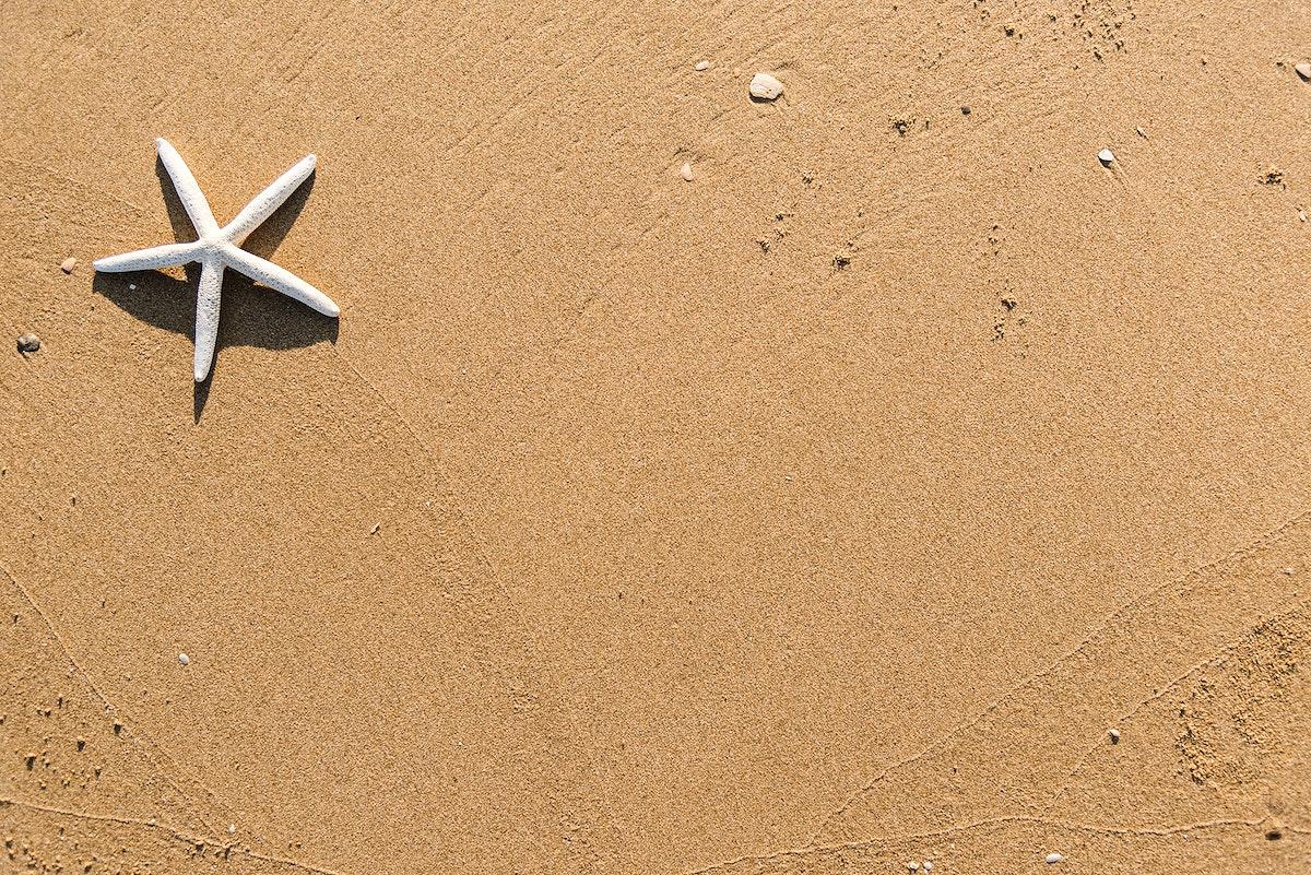 Dried starfish on the beach background