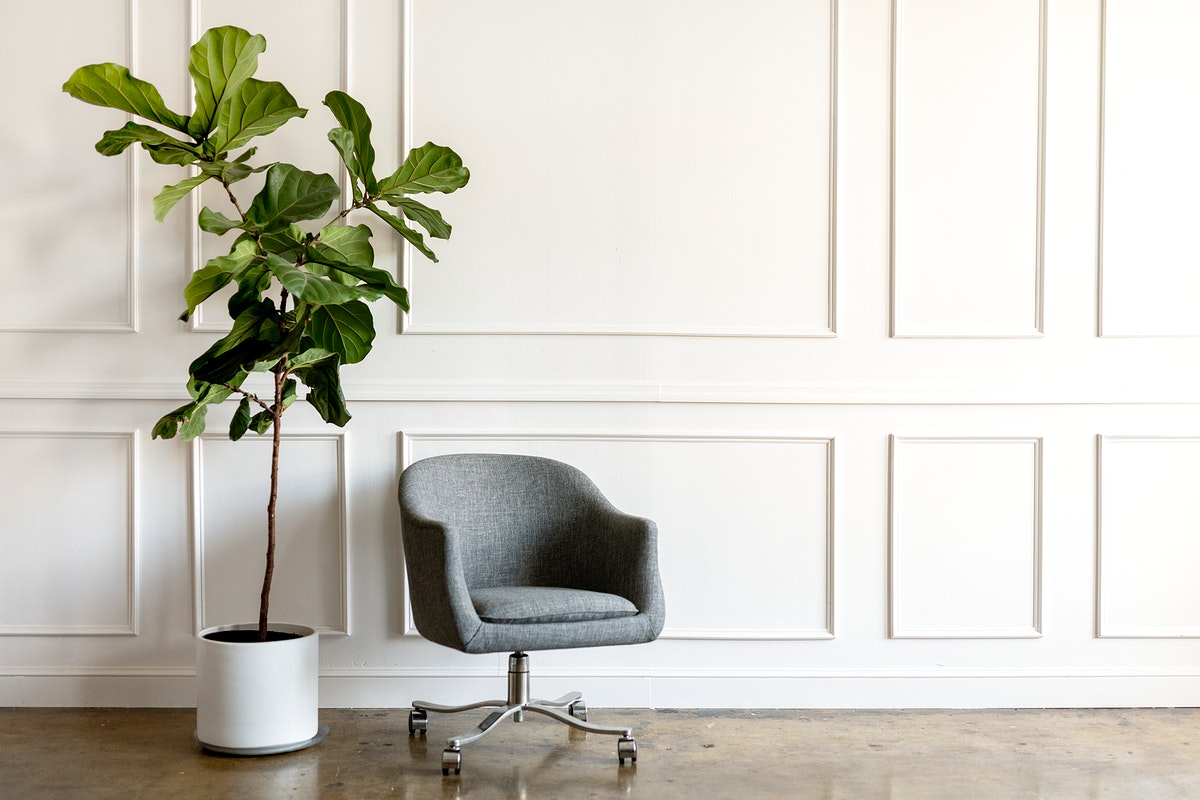 Houseplant by a gray chair