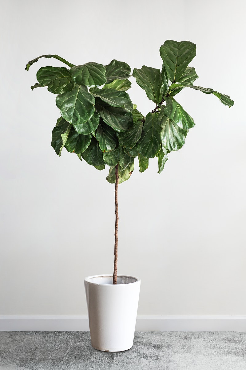 Green plant decoration design mockup