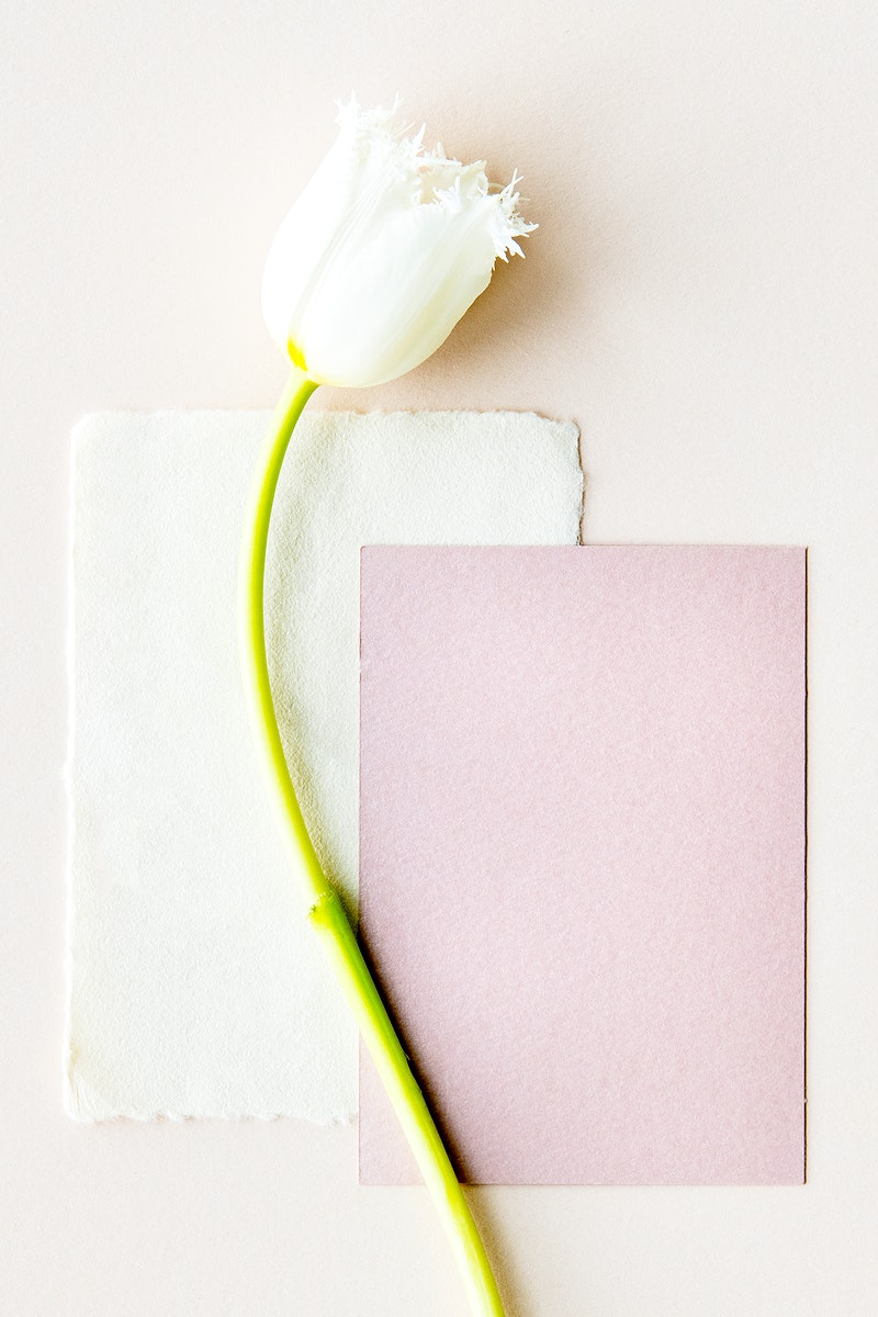 White parrot tulip with blank cards