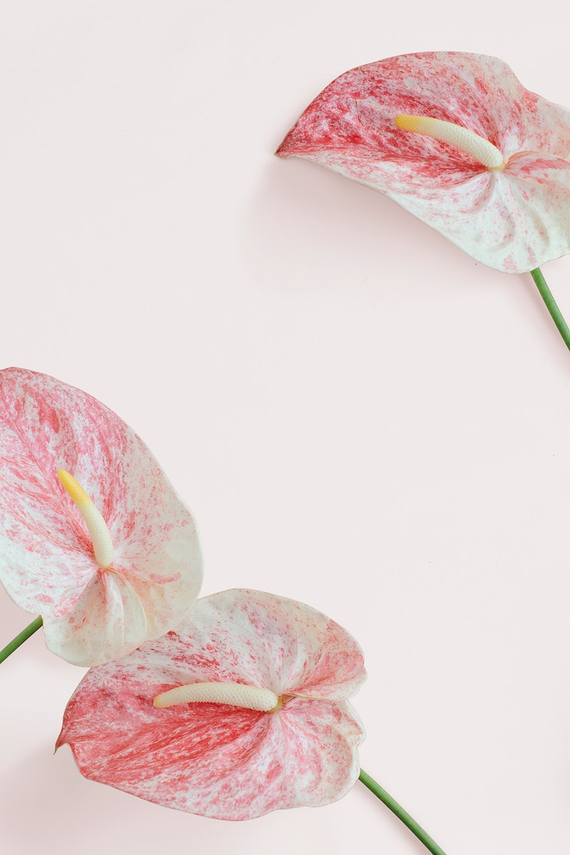 Pink anthurium pattern on a pink background