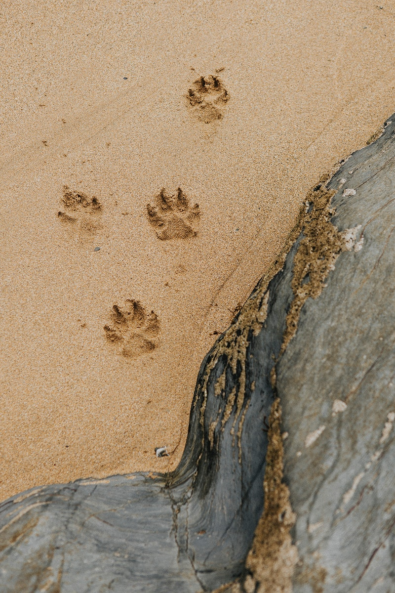 Cute paw prints on the sand