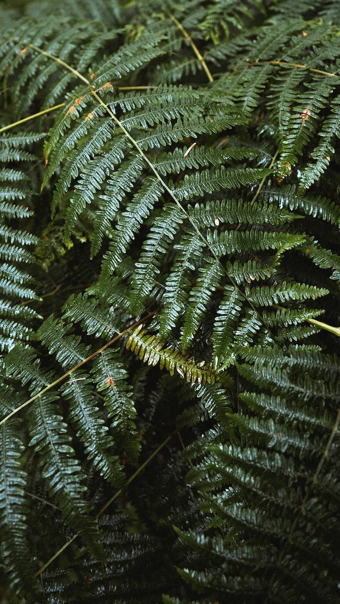 Fern leaves in Mull temperate rainforest mobile phone wallpaper