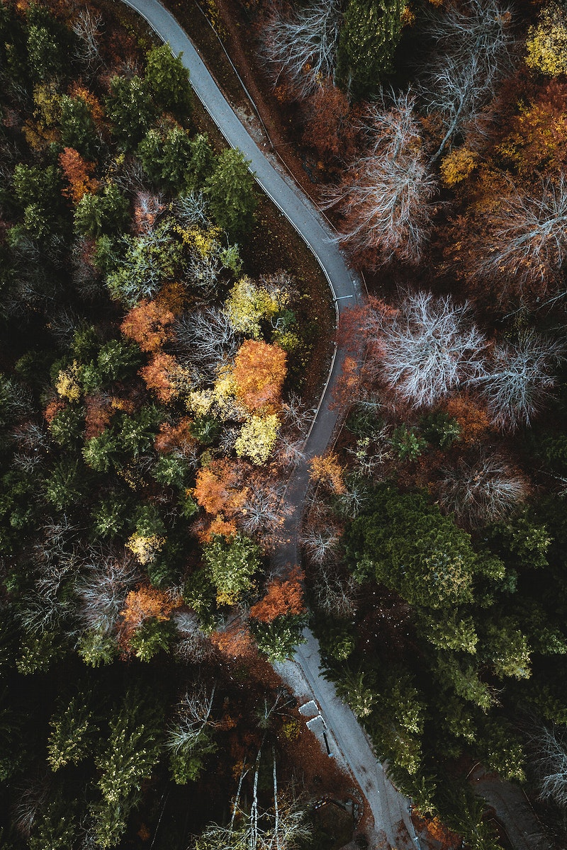 Road among an autumnal forest drone shot