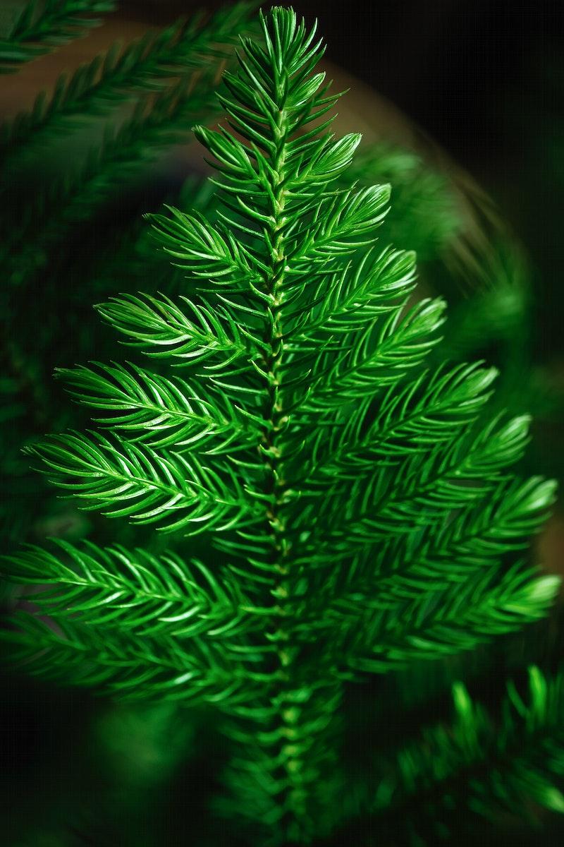 Single green Christmas tree close up