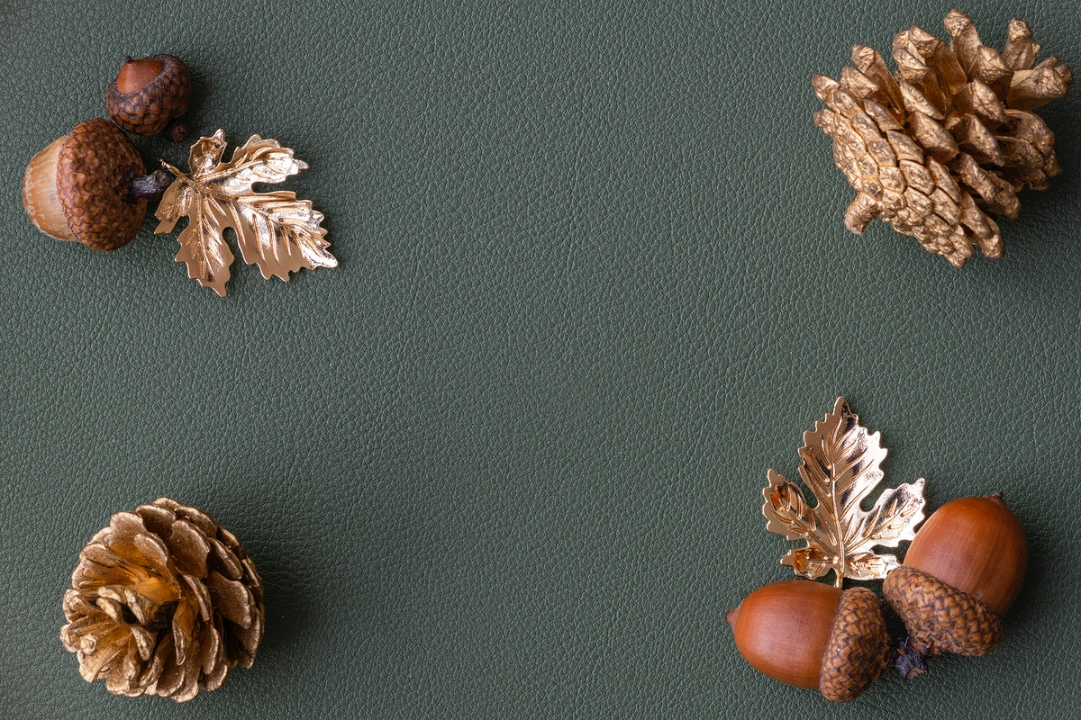 Acorns and pinecones on a gray background