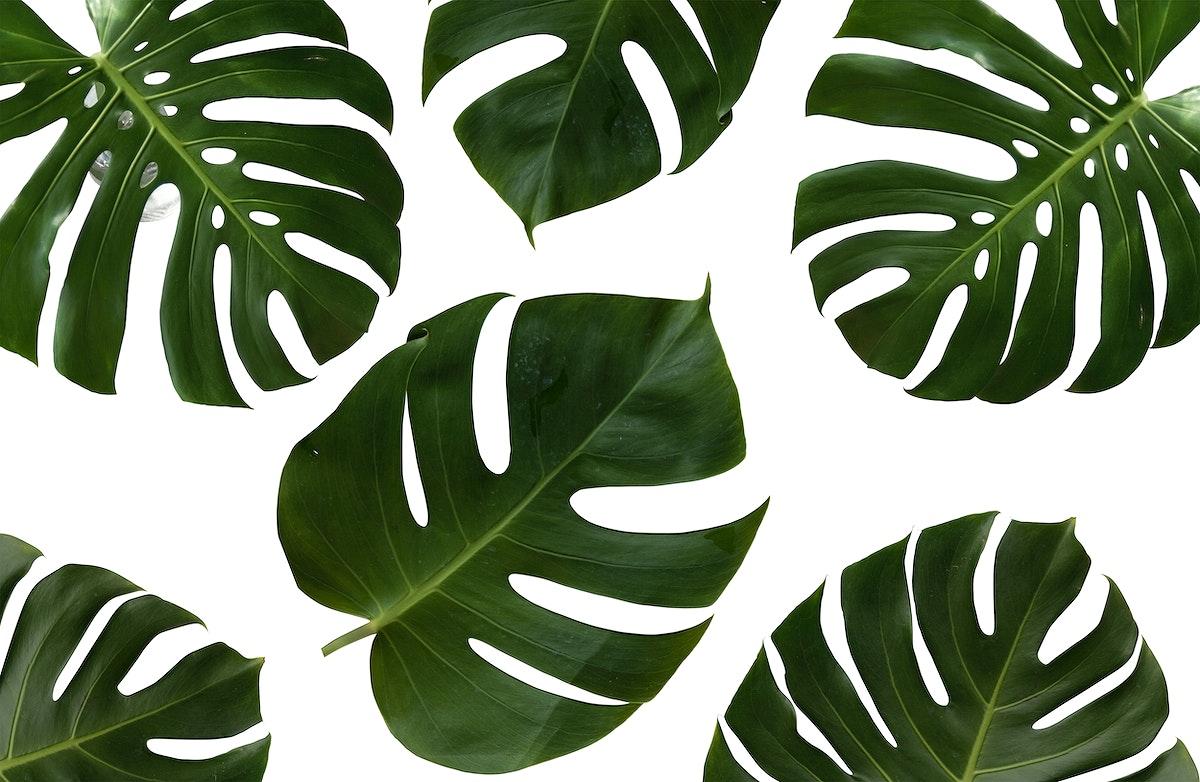 Tropical plants psd