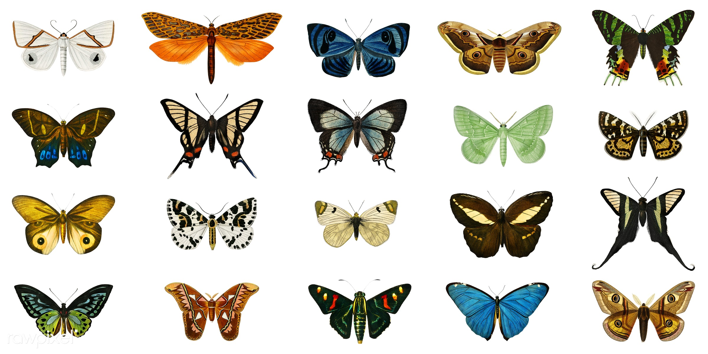 Collection of butterflies and moths illustrated by Charles Dessalines D' Orbigny (1806-1876). - butterfly, ancient,...