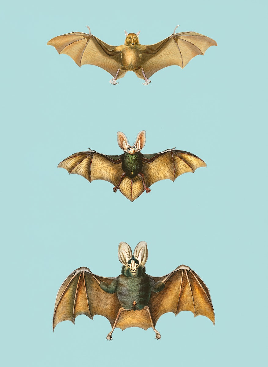 Vintage Illustration of Collection of bats.