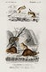 """Beaver (Castor) and Jerboa (Dipus) illustrated by <a href=""""https://www.rawpixel.com/search/Charles%20Dessalines%20D%27%20Orbigny?sort=curated&amp;page=1"""">Charles Dessalines D&#39; Orbigny</a> (1806-1876) .Digitally enhanced from our own 1892 edition of Dictionnaire Universel D&#39;histoire Naturelle."""
