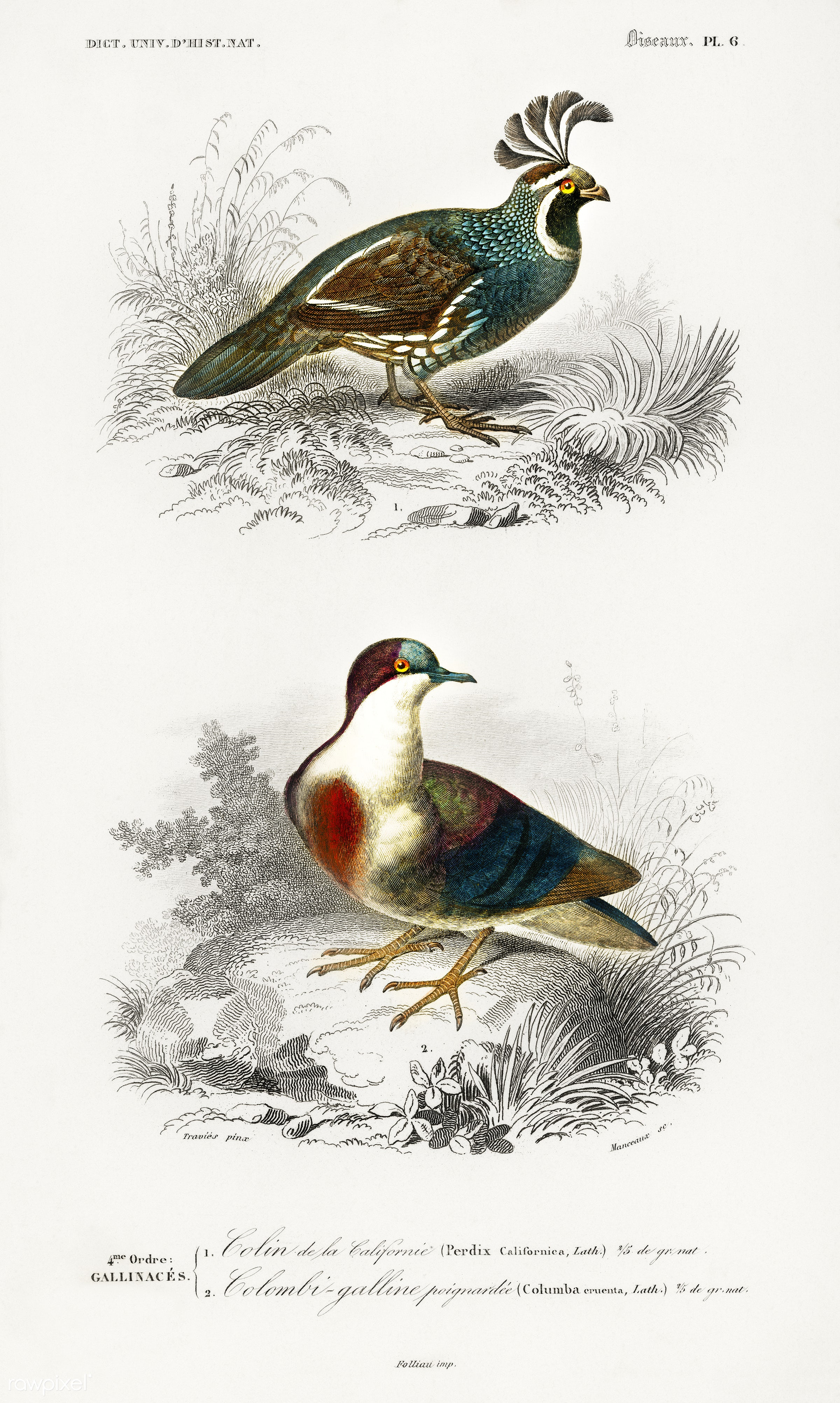 Different types of birds illustrated by Charles Dessalines D' Orbigny (1806-1876). Digitally enhanced from our own 1892...