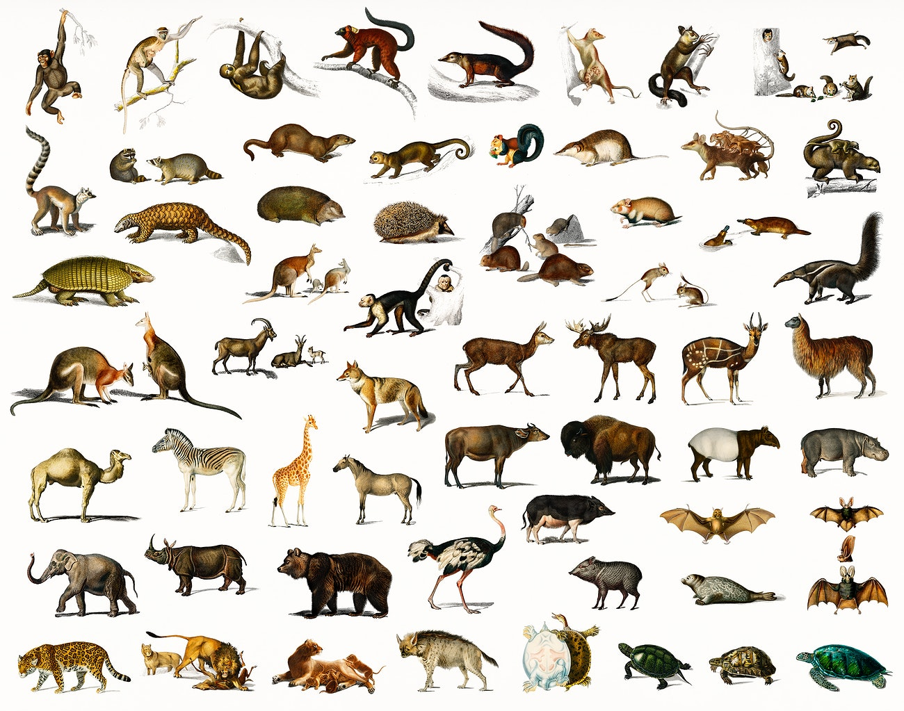 Different Types Of Animals Illustrated By Charles Dessalines D Or Royalty Free Illustration 323696