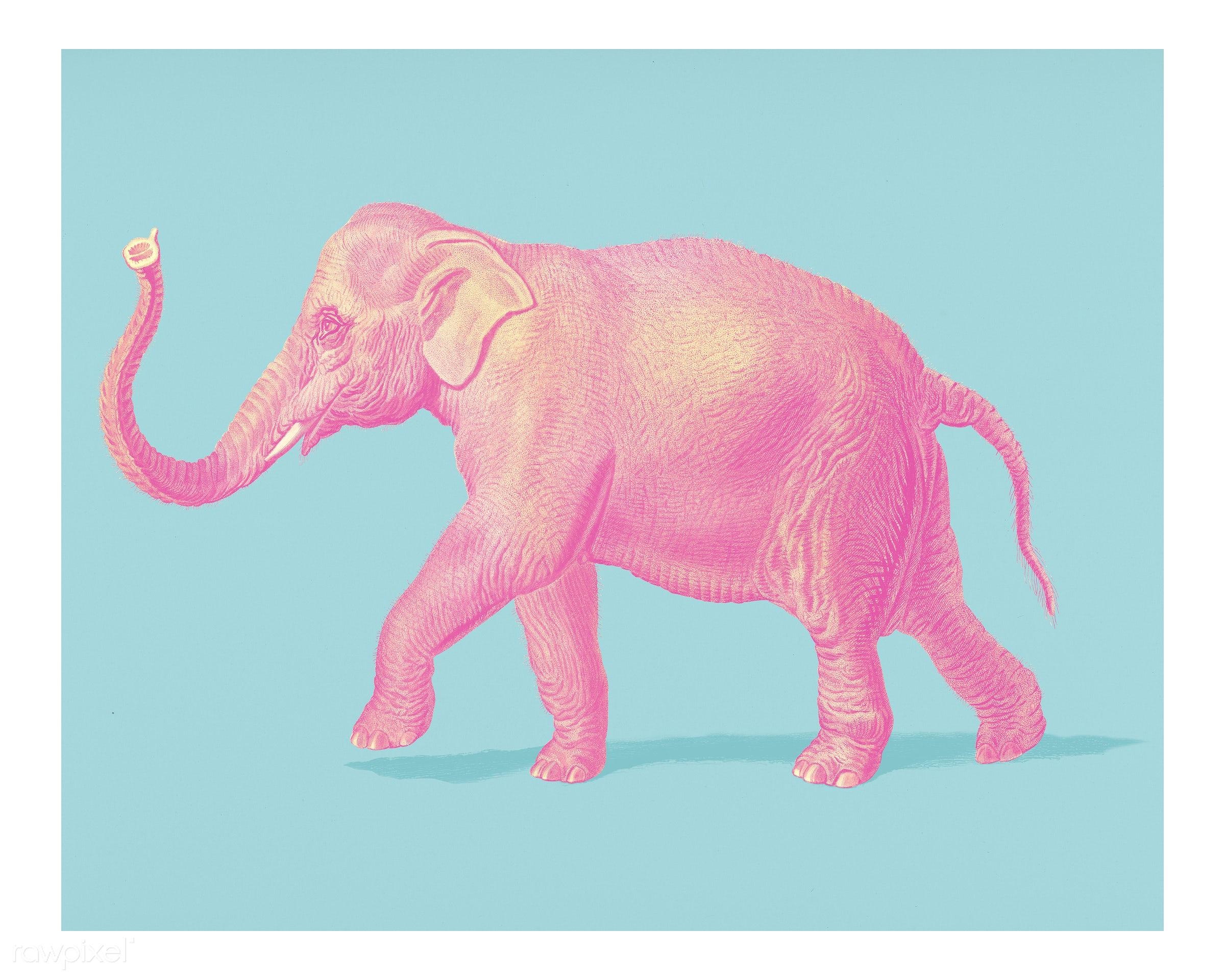 Asiatic elephant (Elephas maximus) indicus illustrated by Charles Dessalines D' Orbigny (1806-1876). Digitally enhanced...
