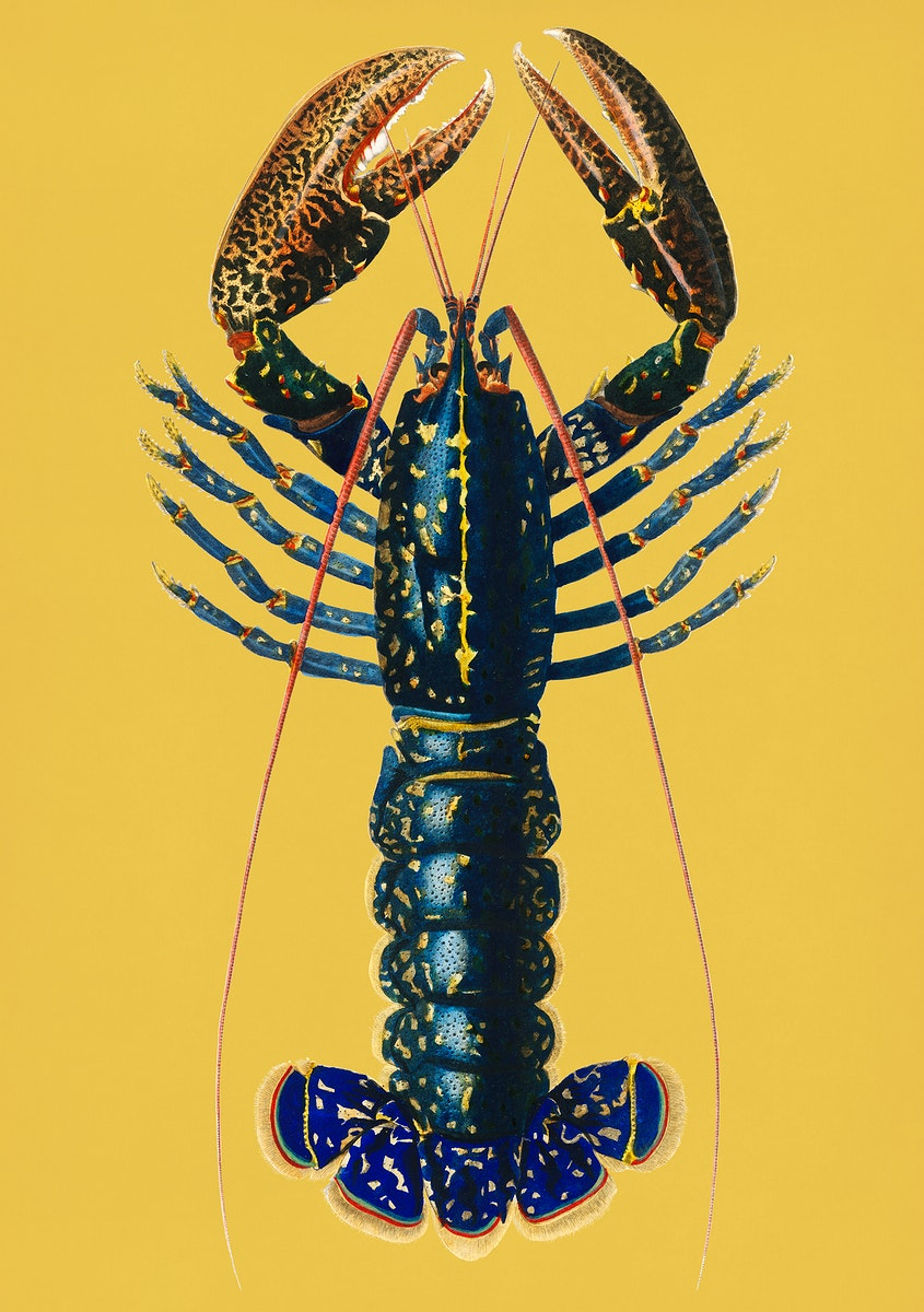 Vintage Illustration of Crimson Crawfish