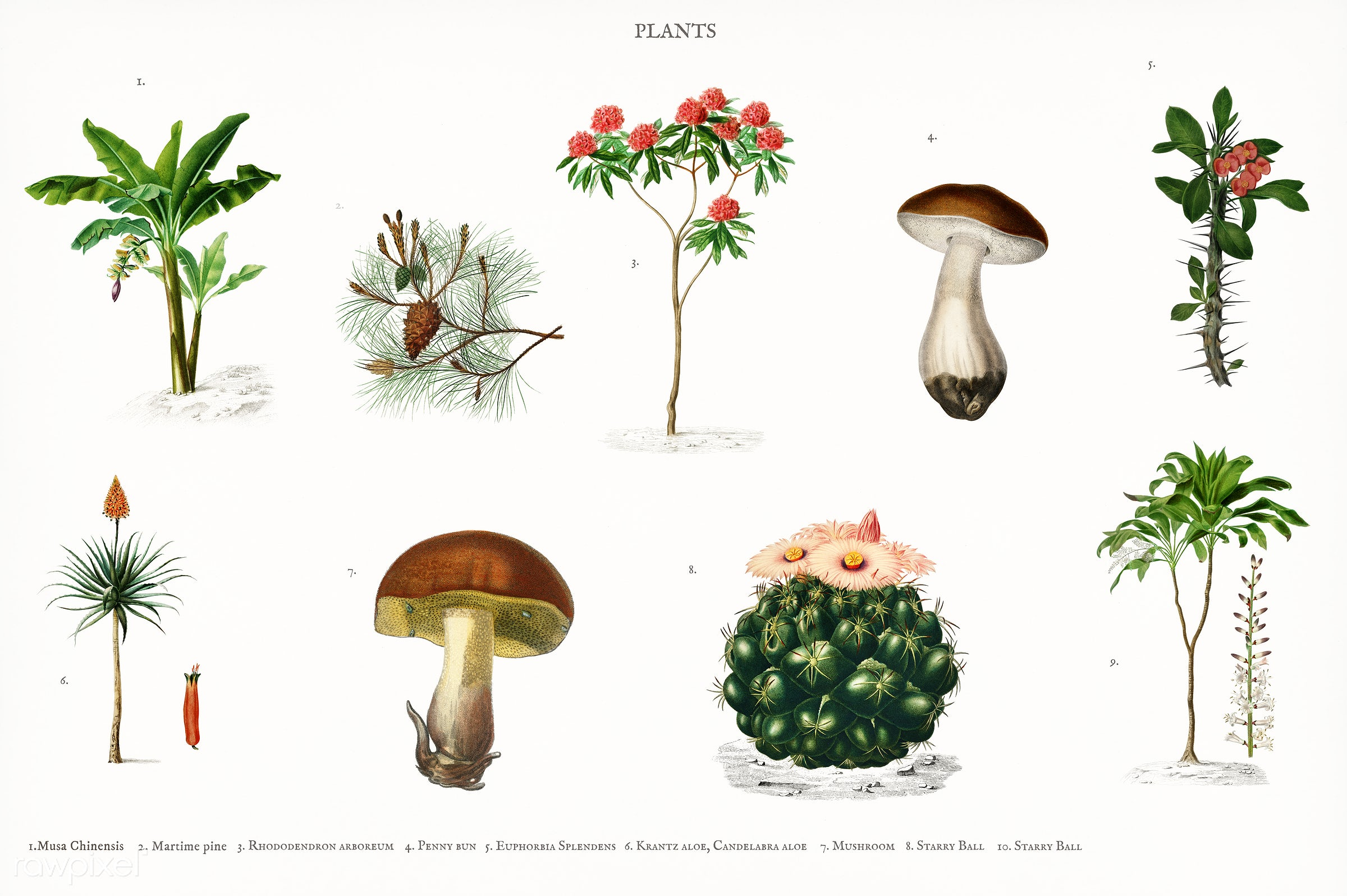 Different types of plants illustrated by Charles Dessalines D' Orbigny (1806-1876). Digitally enhanced from our own 1892...