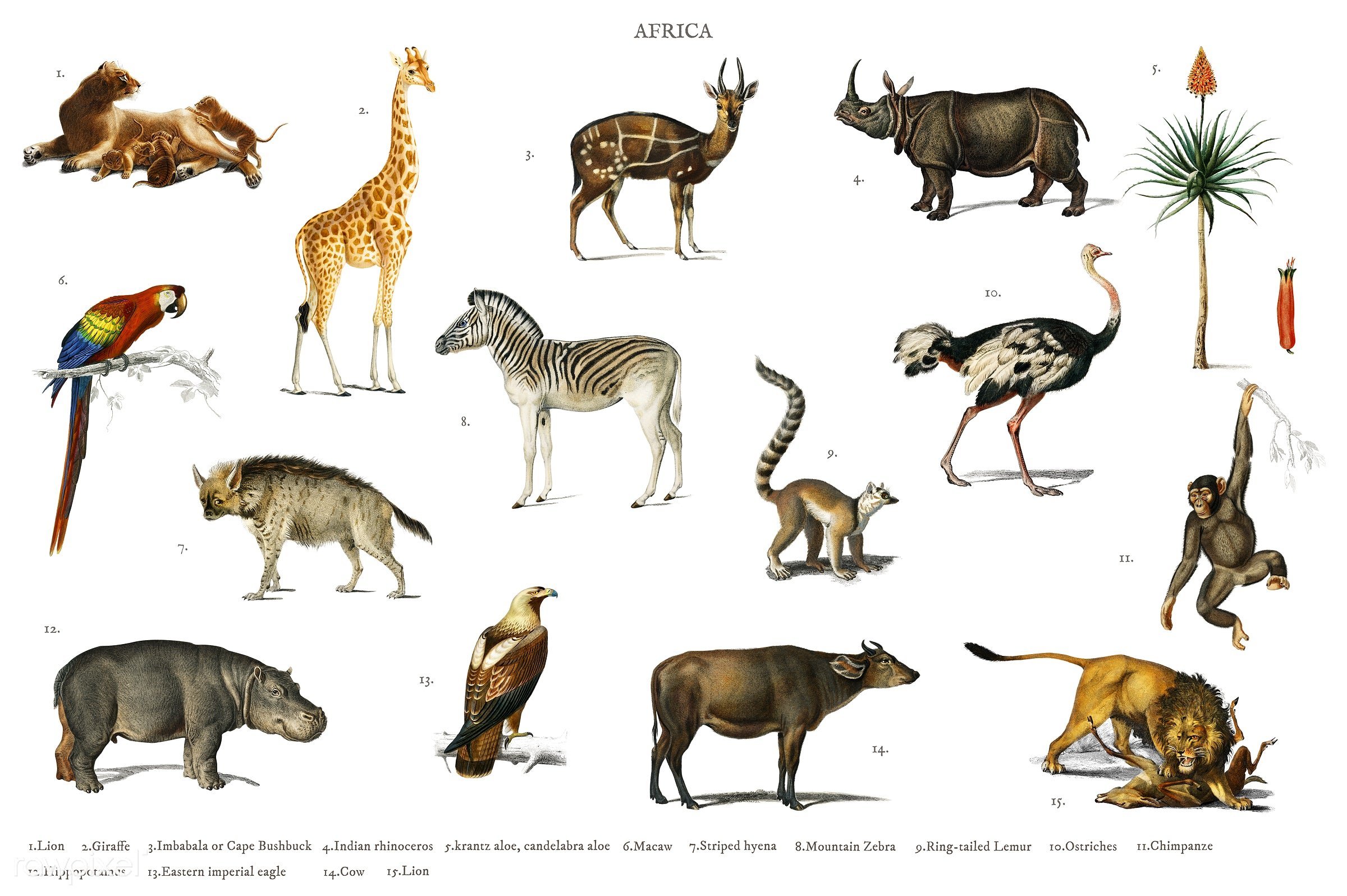 Different types of animals illustrated by Charles Dessalines D' Orbigny (1806-1876). Digitally enhanced from our own...