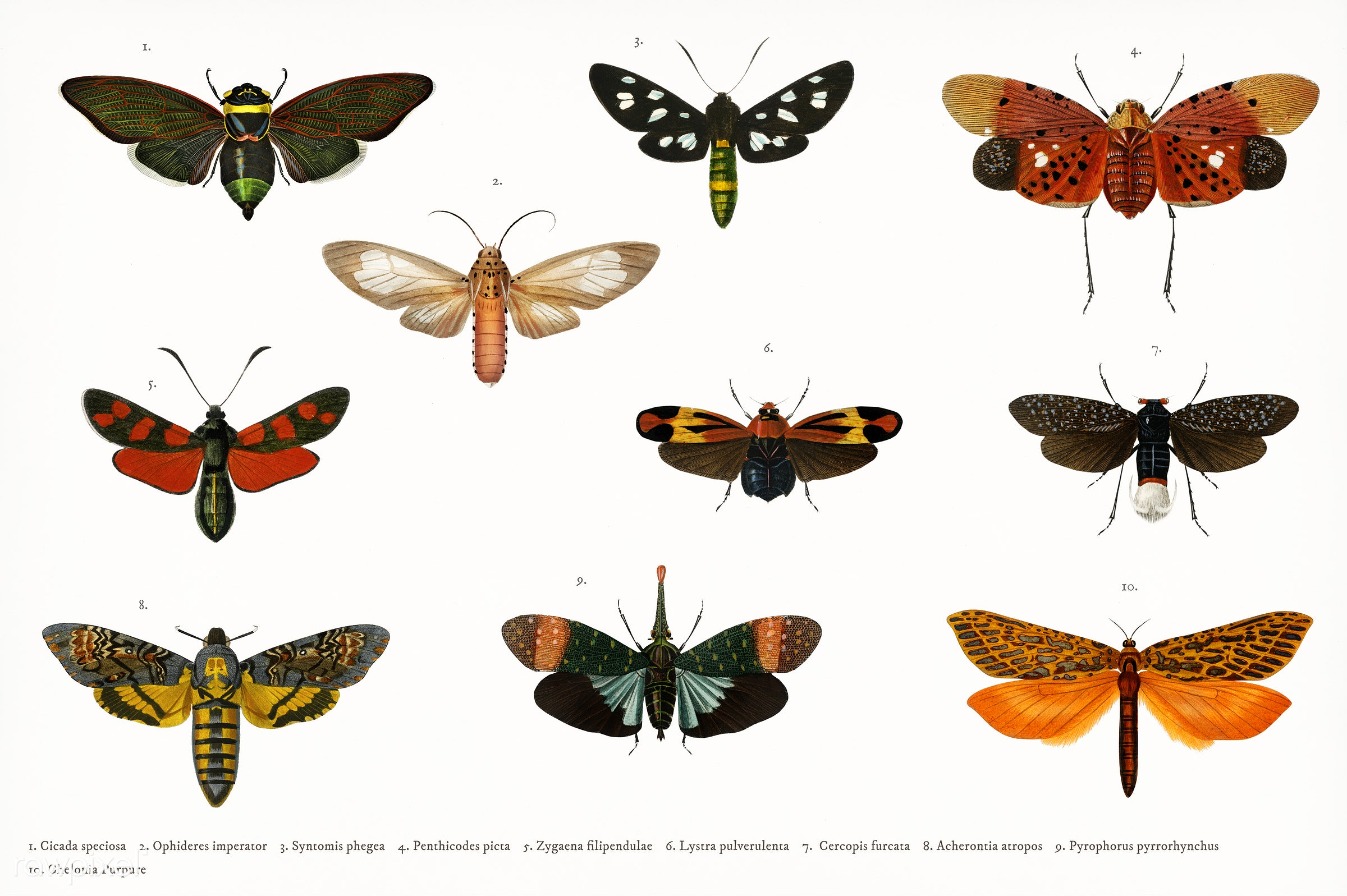 Different types of butterfly illustrated by Charles Dessalines D' Orbigny (1806-1876). Digitally enhanced from our own...