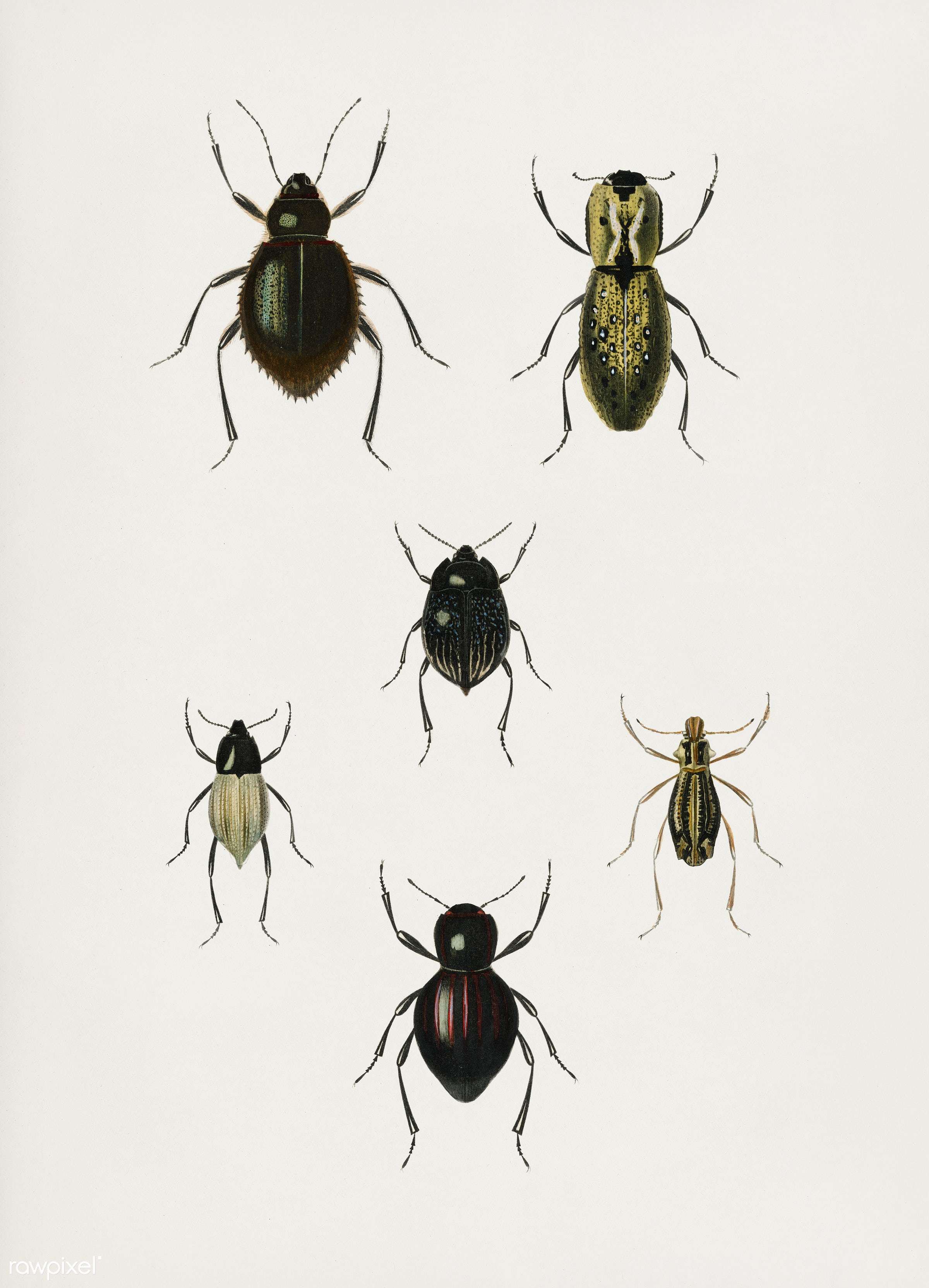 Different types of beetles illustrated by Charles Dessalines D' Orbigny (1806-1876). Digitally enhanced from our own...