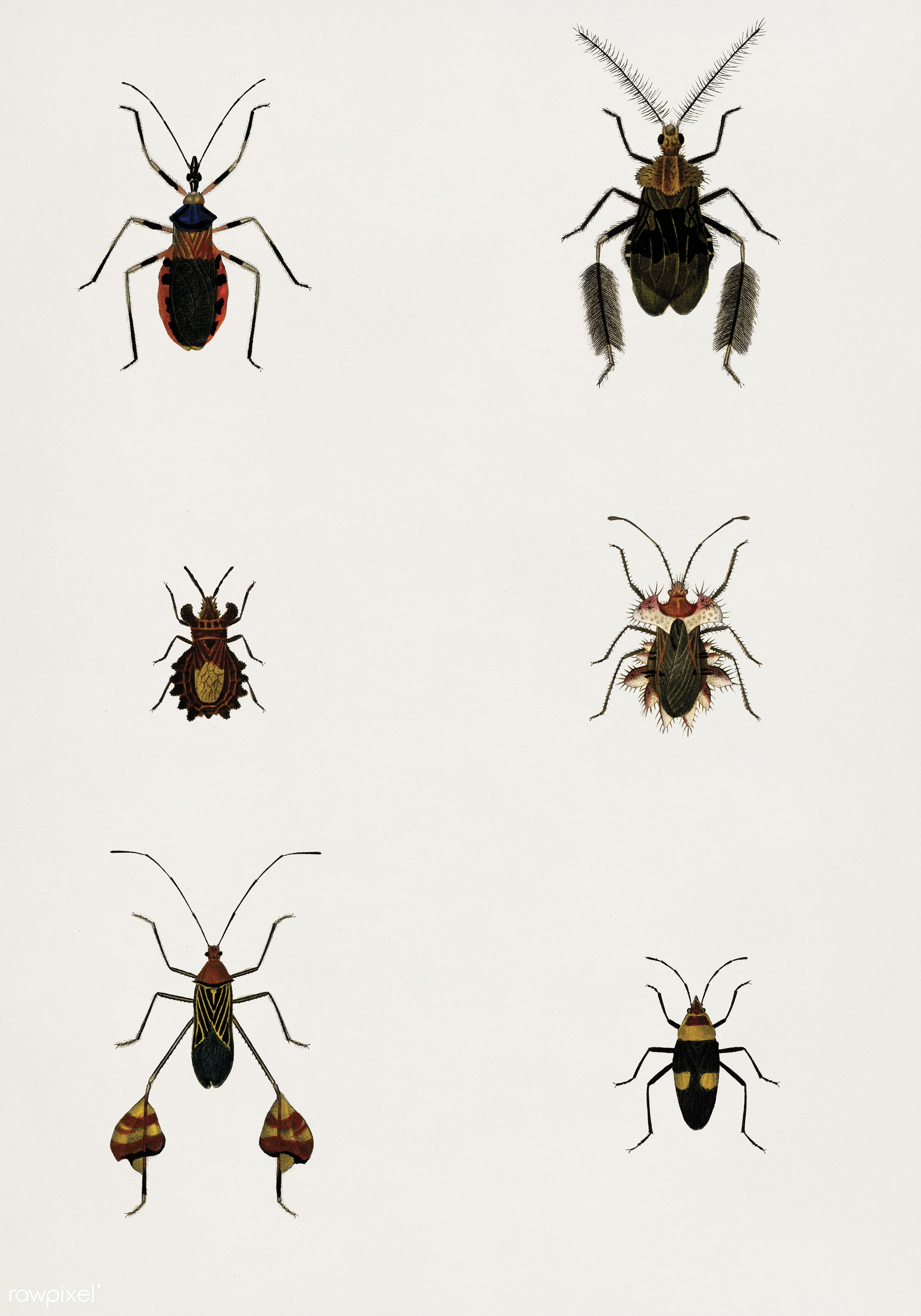 Different types of bugs illustrated by Charles Dessalines D' Orbigny (1806-1876).Digitally enhanced from our own 1892...