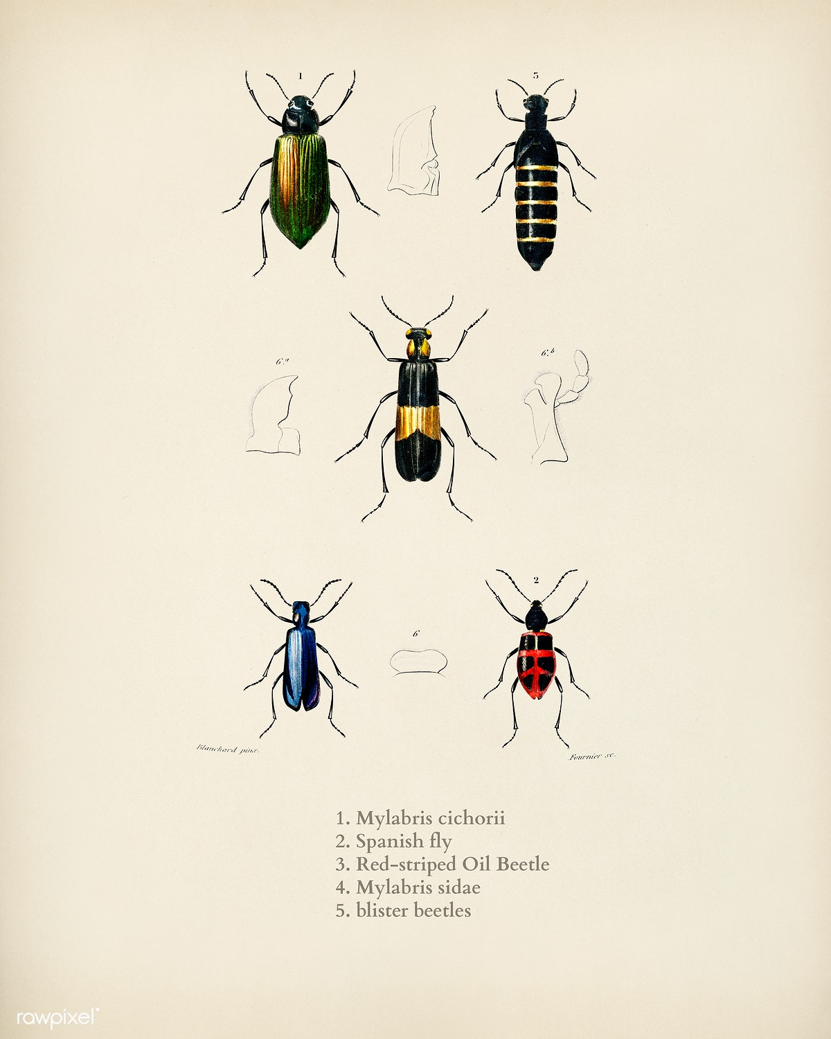 Download premium illustration of Different types of beetles illustrated by