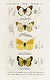 """Different types of butterfly illustrated by <a href=""""https://www.rawpixel.com/search/Charles%20Dessalines%20D%27%20Orbigny?sort=curated&amp;page=1"""">Charles Dessalines D&#39; Orbigny</a> (1806-1876). Digitally enhanced from our own 1892 edition of Dictionnaire Universel D&#39;histoire Naturelle."""