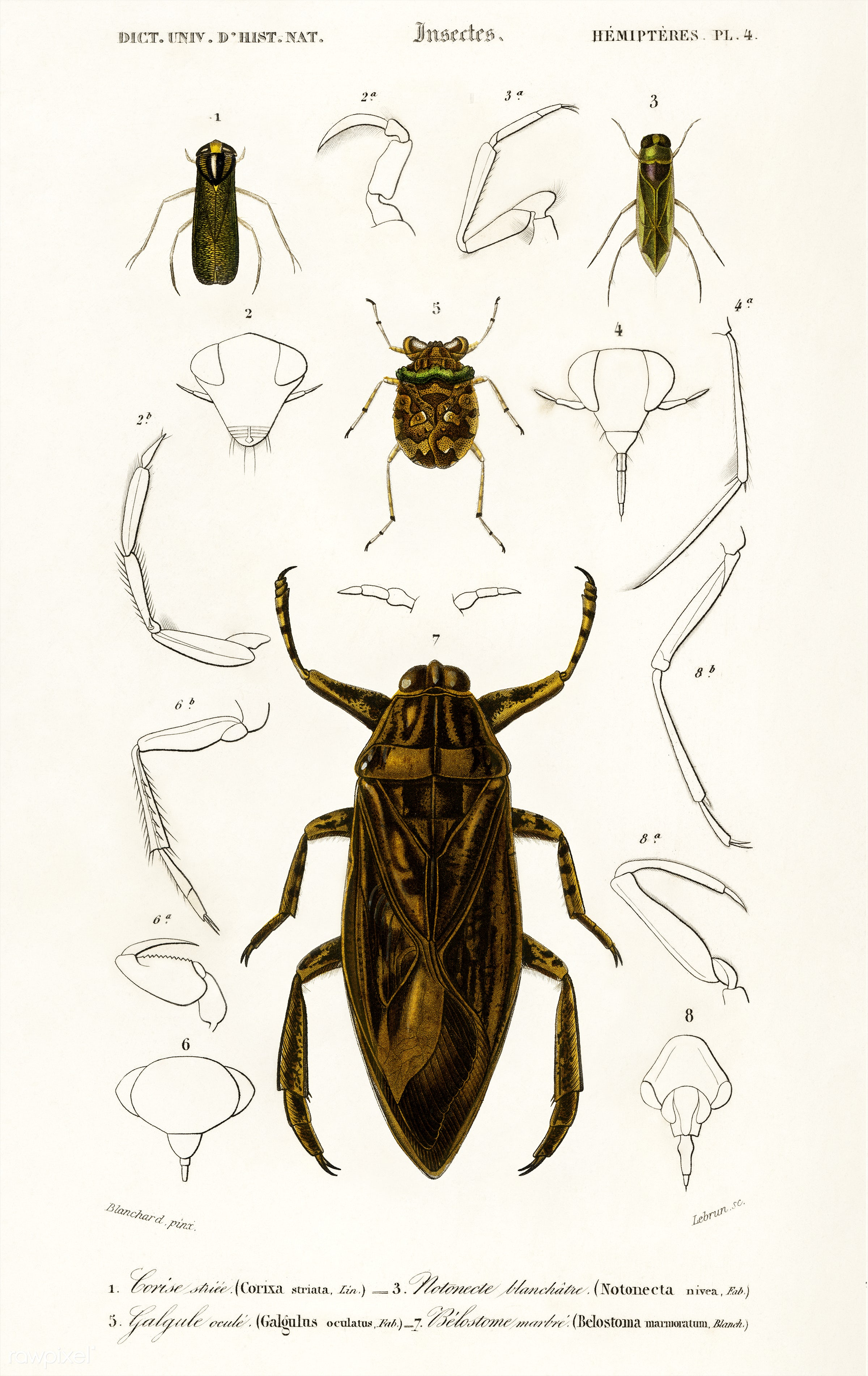 Different types of insects illustrated by Charles Dessalines D' Orbigny (1806-1876). Digitally enhanced from our own...