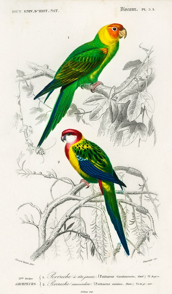 Different types of birds illustrated by Charles Dessalines D' Orbigny (1806-1876) Digitally enhanced from our own 1892…
