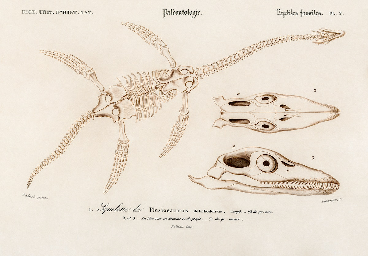 Plesiosaurus illustrated by Charles Dessalines D' Orbigny (1806-1876). Digitally enhanced from our own 1892 edition of…