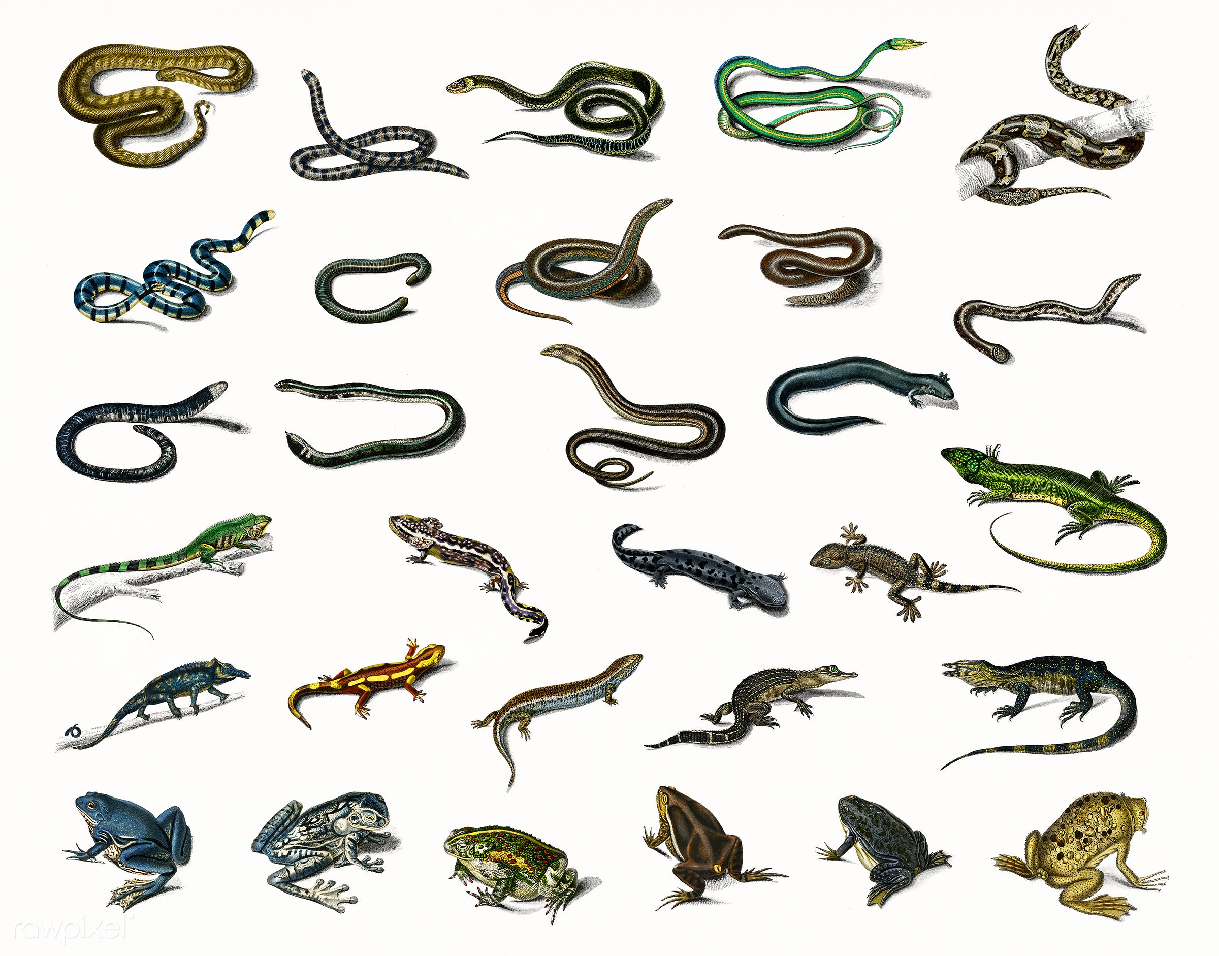 Different types of reptiles illustrated by Charles Dessalines D' Orbigny (1806-1876). Digitally enhanced from our own...