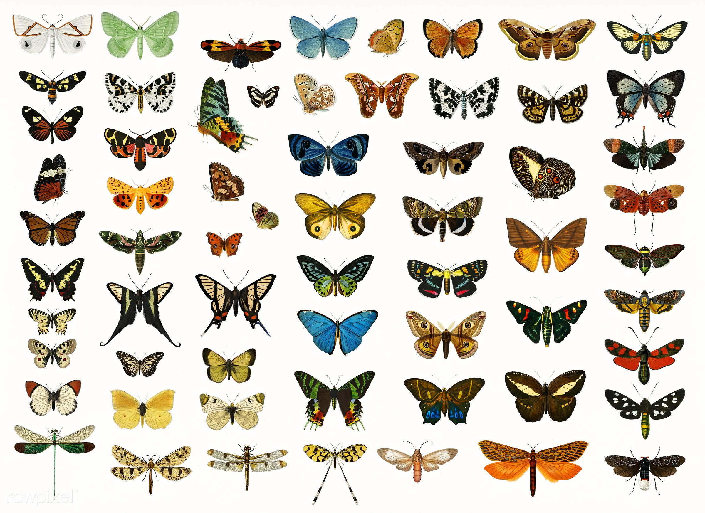 Different types of butterflies and moths illustrated by Charles Dessalines D' Orbigny (1806-1876). Digitally enhanced...