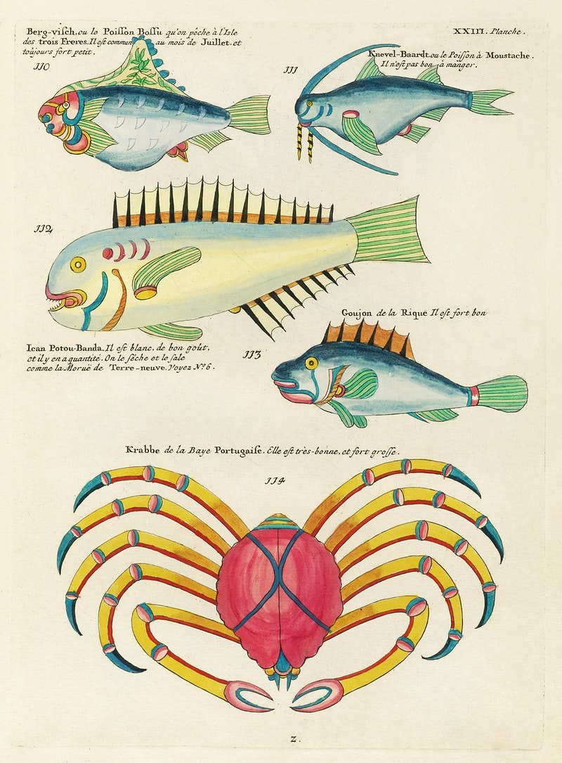Colourful and surreal illustrations of fishes and crabs found in the ...