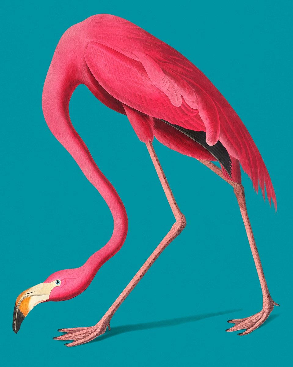 Vintage Illustration of Pink Flamingo.