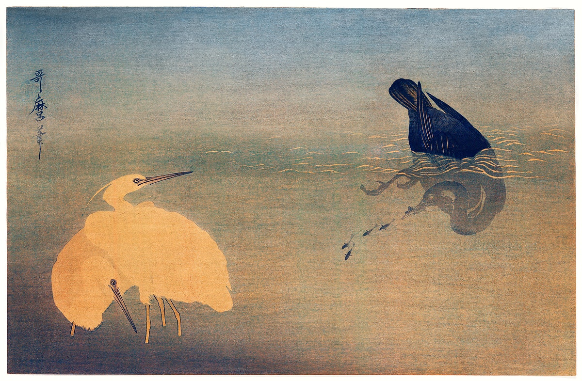U to Shirasagi by Utamaro Kitagawa (1753-1806), a traditional Japanese ukiyo-e style illustration of a cormorant catching…