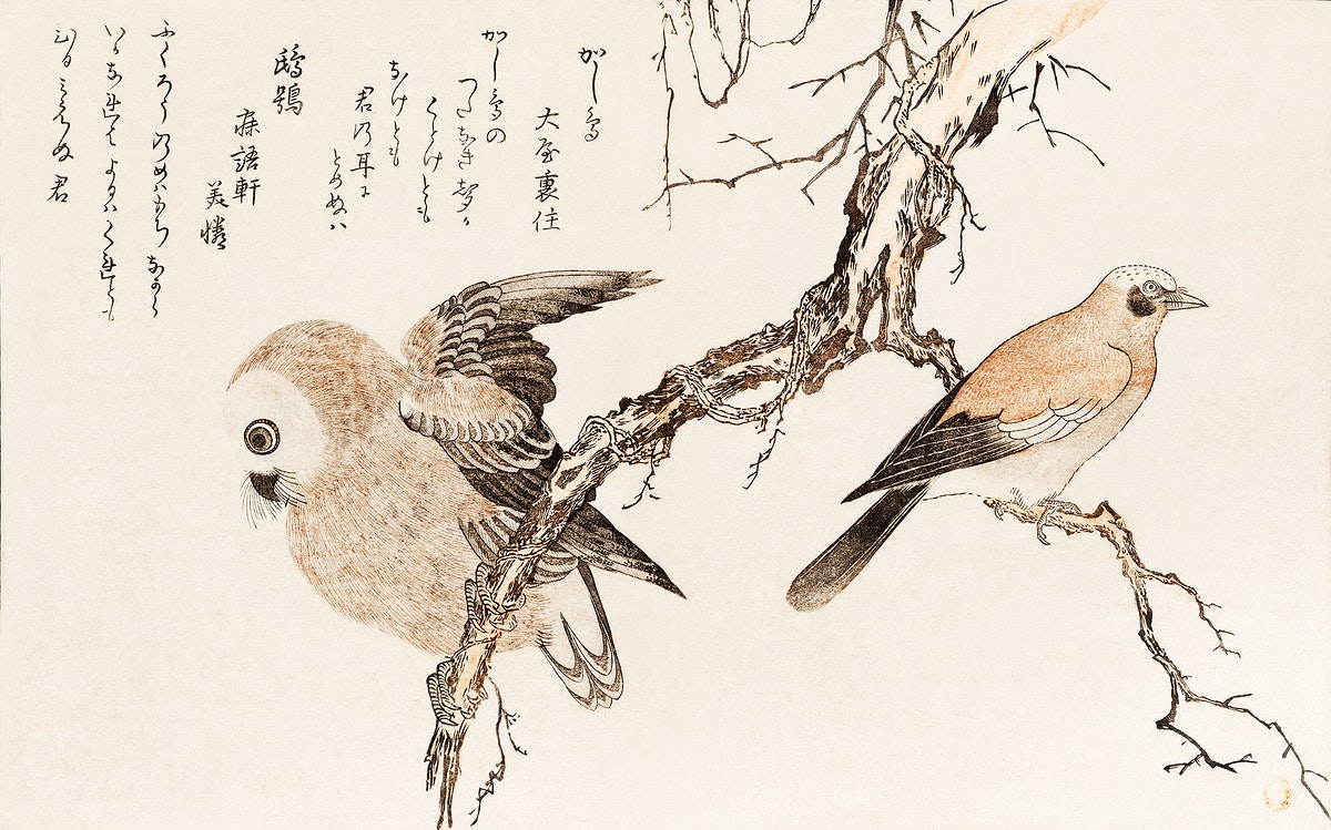 Kashidori Fukuro by Utamaro Kitagawa (1753-1806), a traditional Japanese ukiyo-e style illustration of jay and owl birds and…