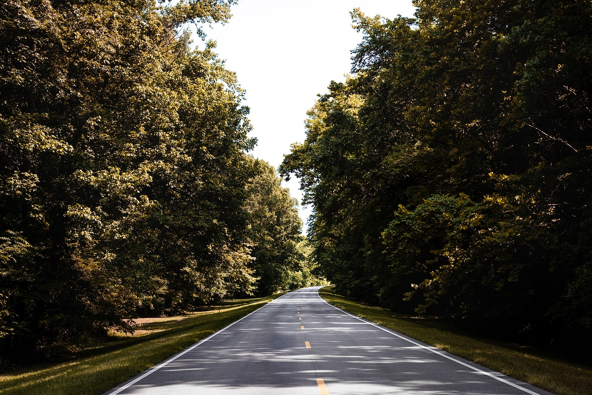 Natchez Trace parkway in Florence, Alabama. Old Mammoth Road. Original image from Carol M. Highsmith's America, Library…